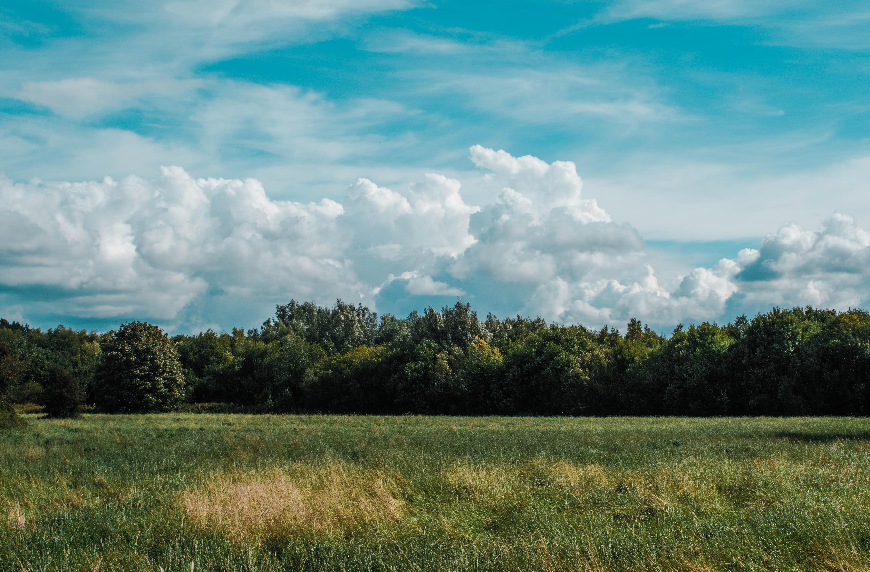 ценны картинки небо и кусты изготовления
