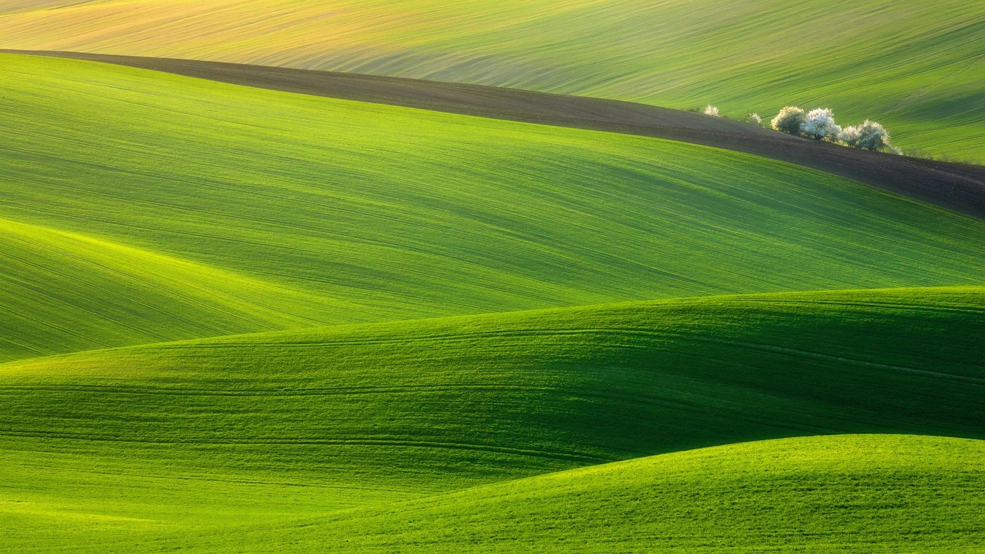 Wallpaper Field Grass Sky Green 1920x1080 1026100 Hd