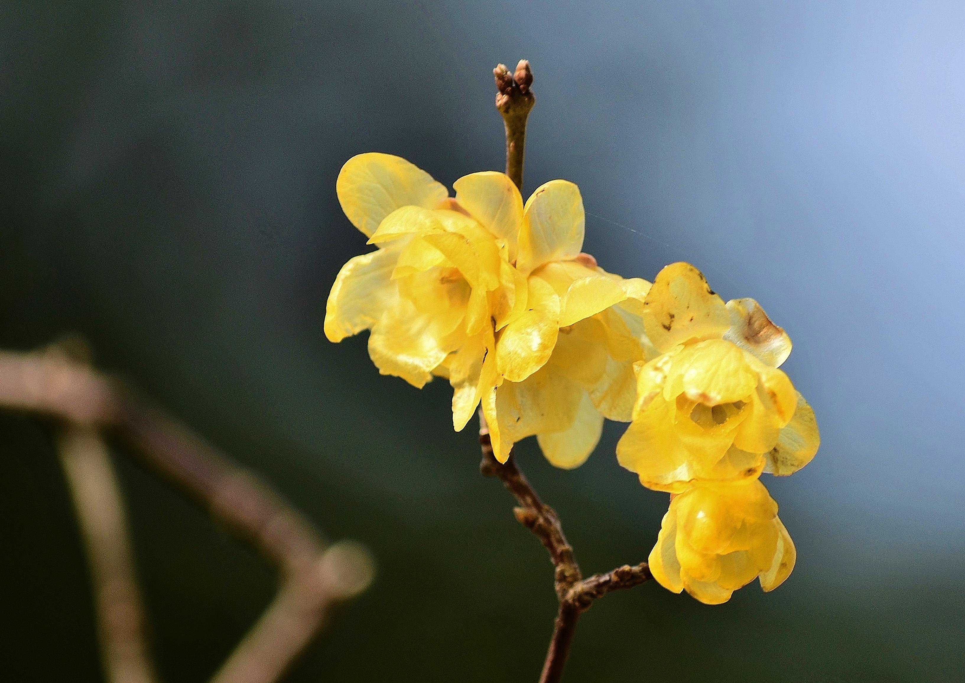 foto de Fond d'écran : champ, la photographie, branche, jaune, fleur ...