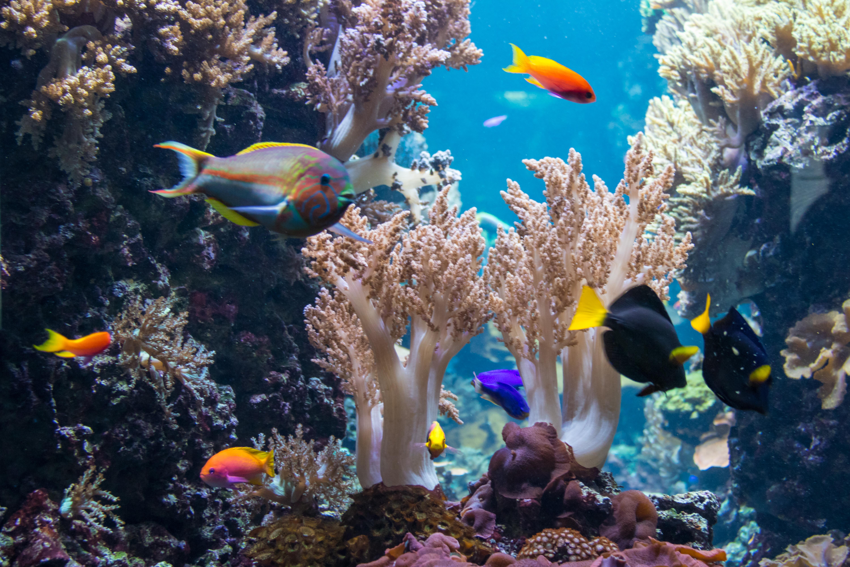 デスクトップ壁紙 ドイツ 水中 コーラル ベルリン タイランド フィスク アクアリウム 脈管内水槽 コロール リーフ 生息地 自然環境 海洋生物学 サンゴ礁の魚 淡水水族館 ポム中心虫 6000x4000 デスクトップ壁紙 Wallhere