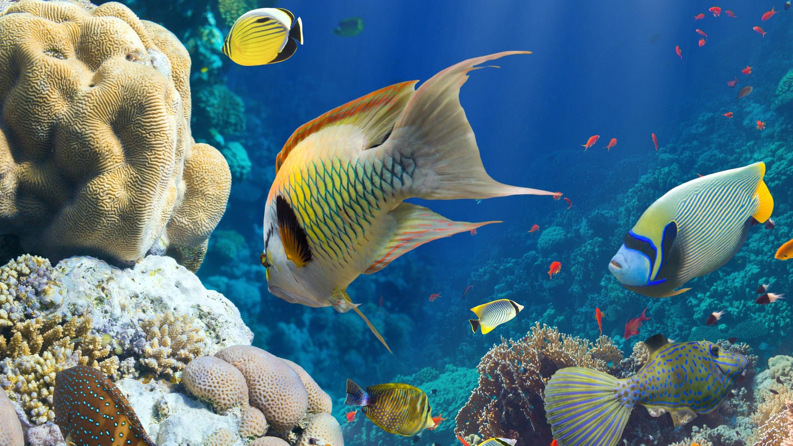 картинки новые рыбы
