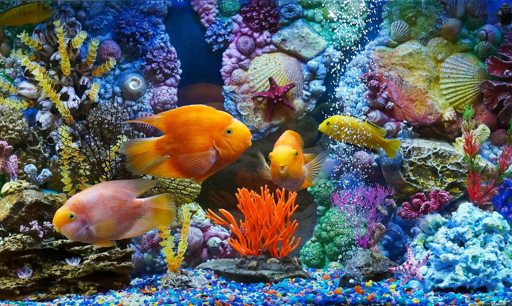 Fond d 39 cran poisson sous marin r cif de corail for Fond ecran aquarium