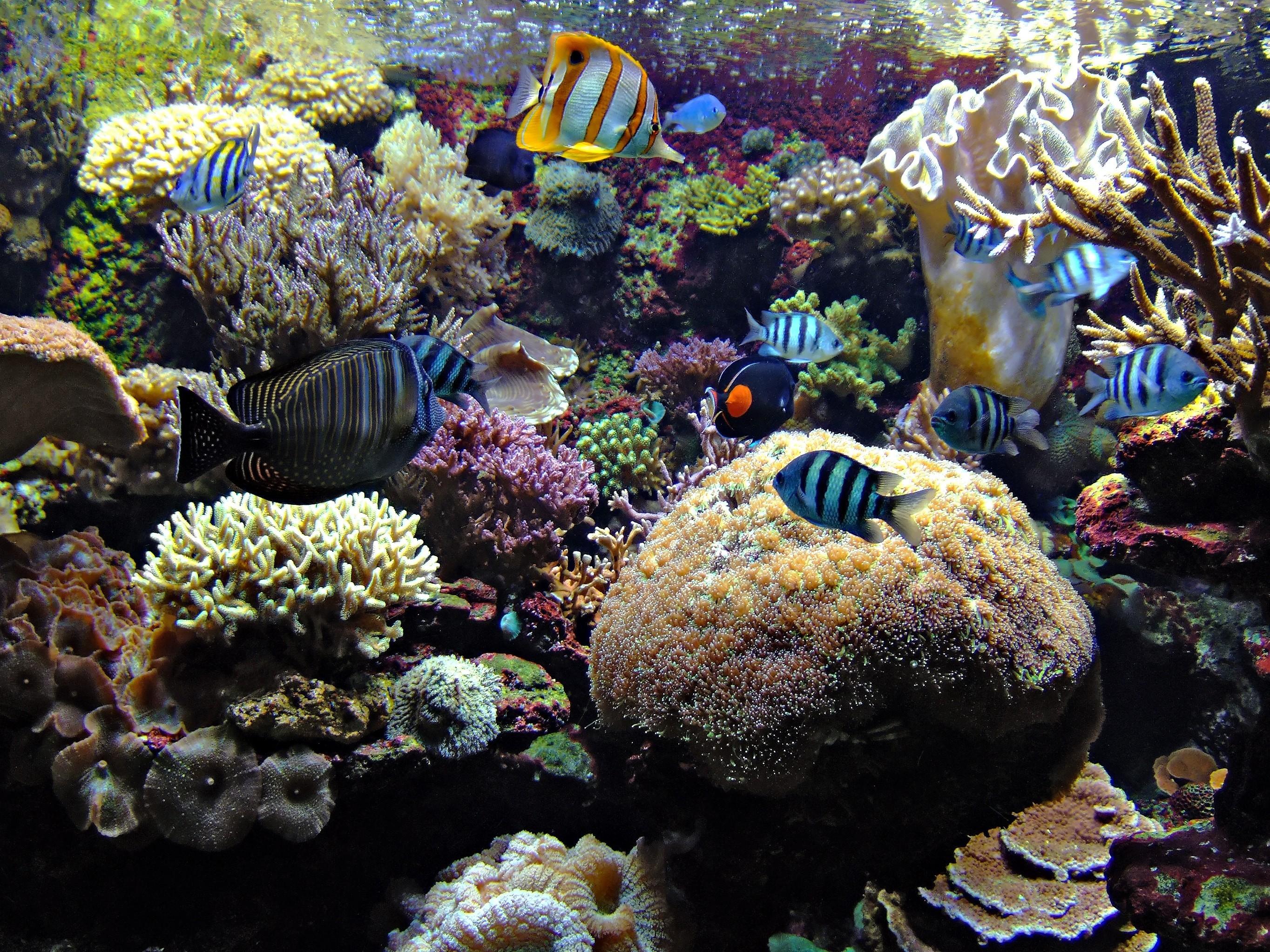 фотографии высокого качества подводный мир кухня вытяжкой, барная