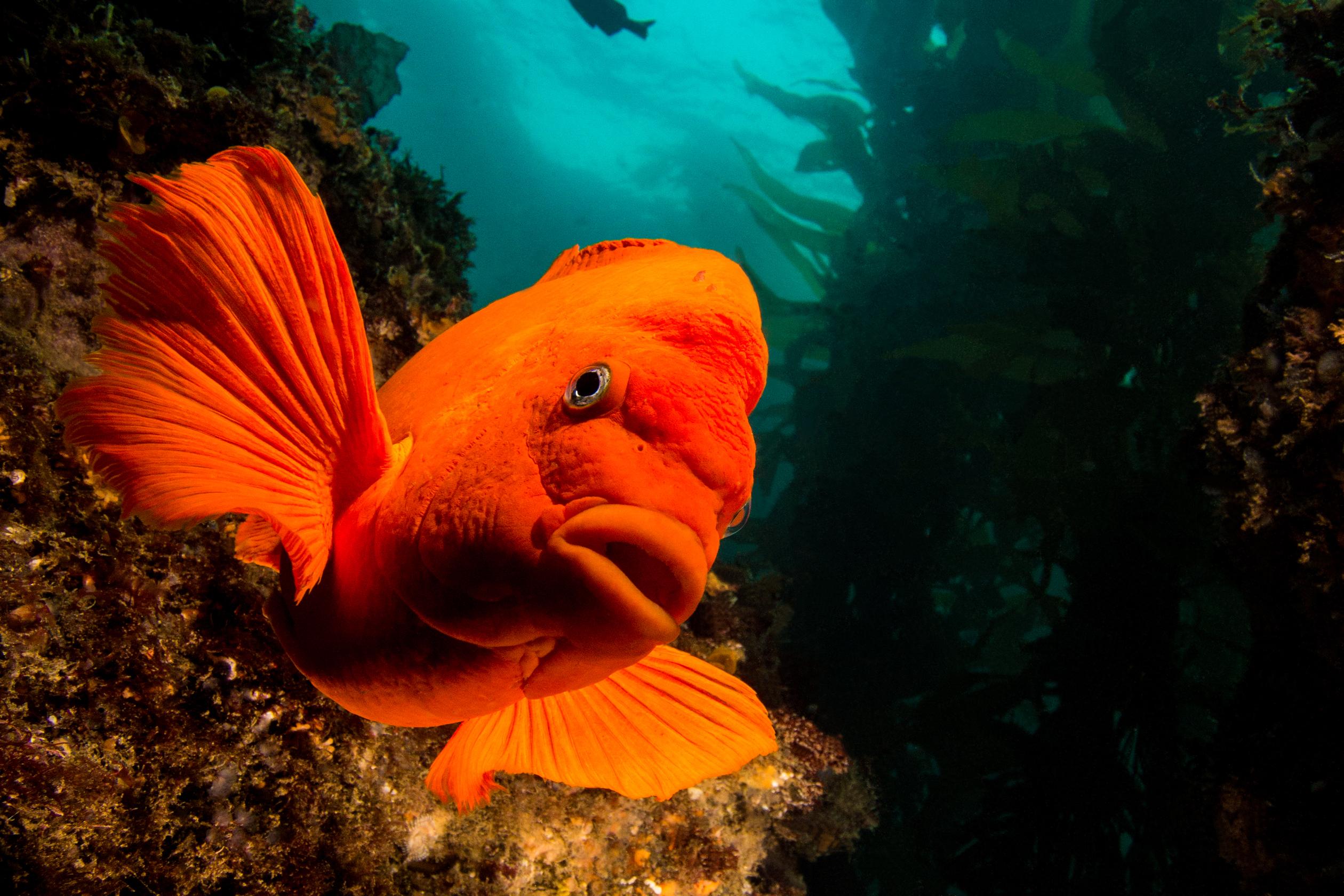 Wallpaper : underwater, orange, coral reef, diving, color, ocean ...