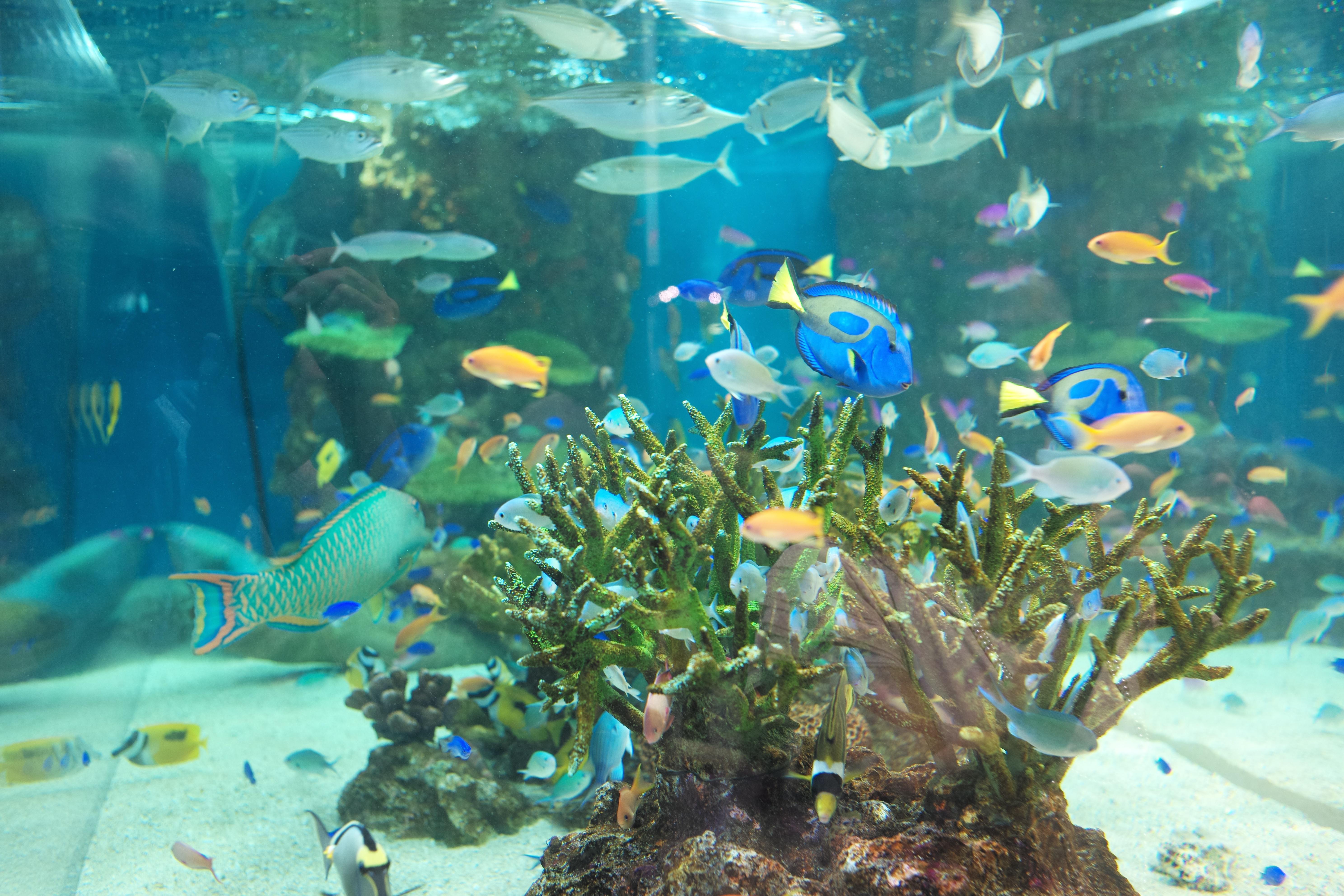 fond d 39 cran poisson sous marin r cif de corail aquarium leica tokyo m la biologie. Black Bedroom Furniture Sets. Home Design Ideas