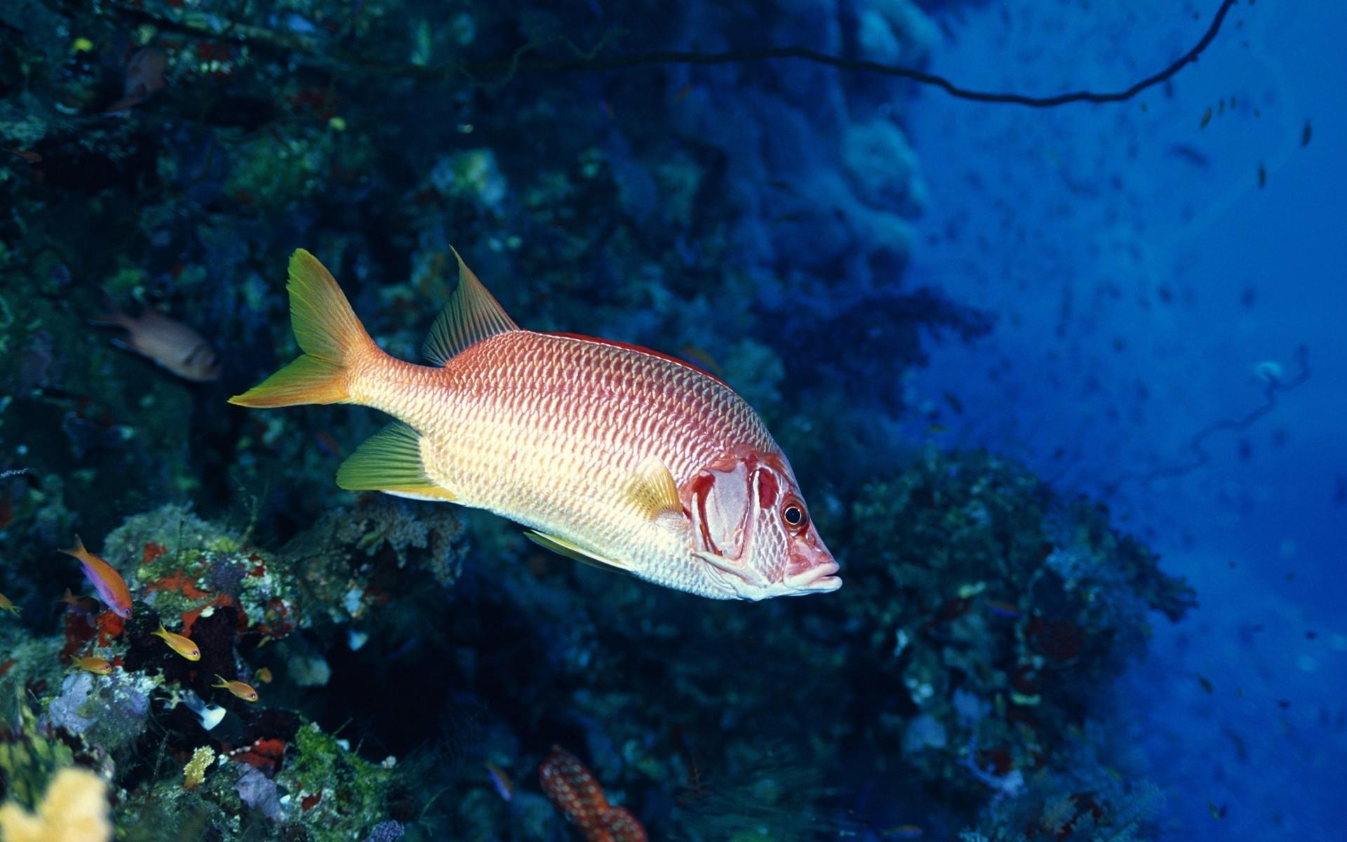 Картинки фото рыб