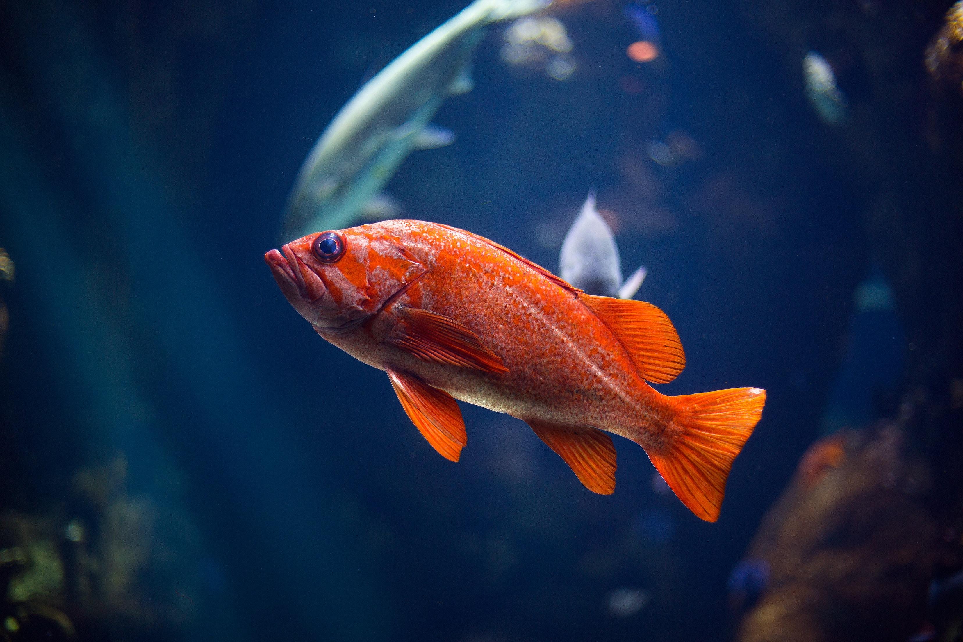 Рыбы фотографии или картинки
