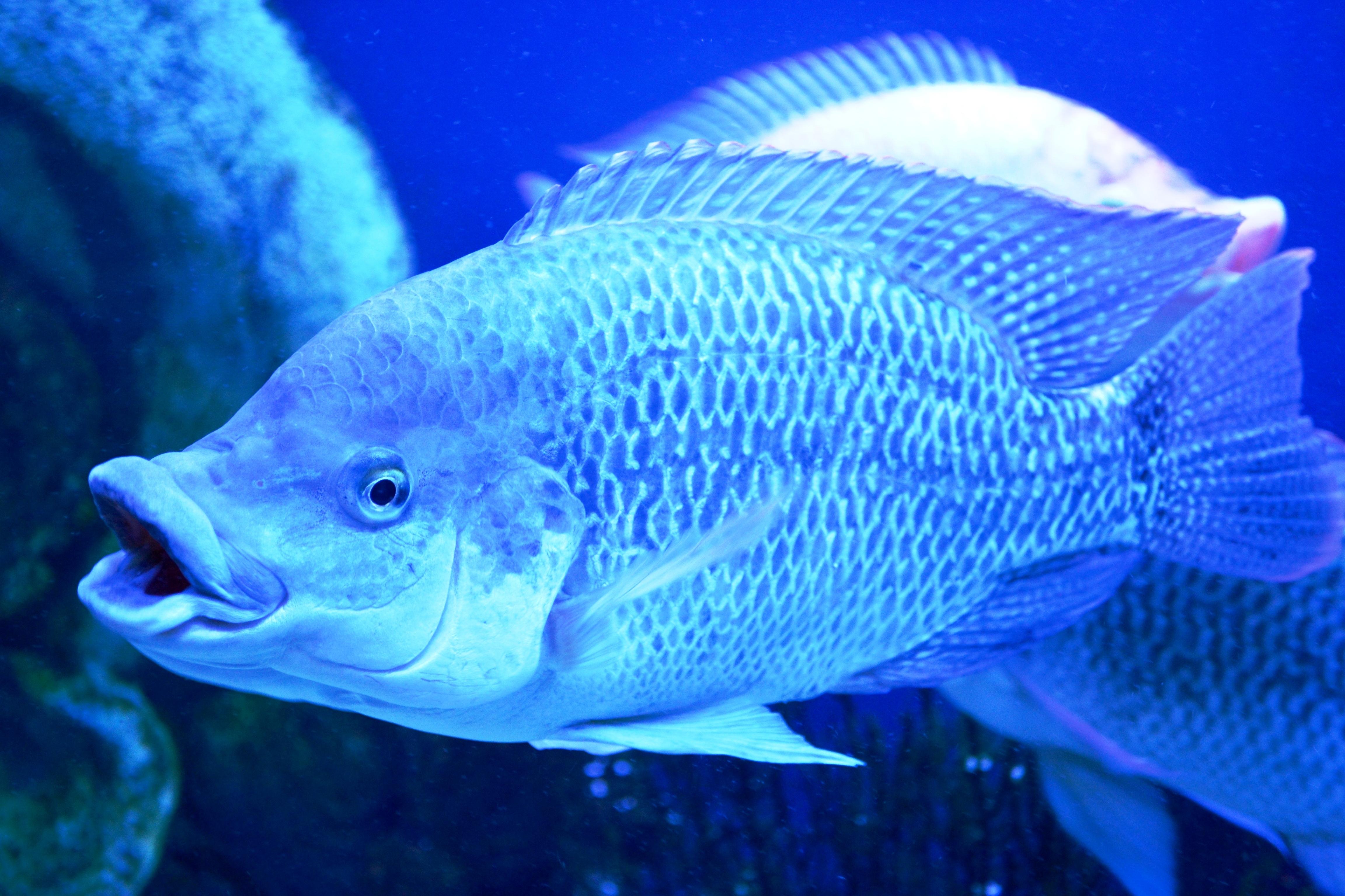 Рыба фото картинка