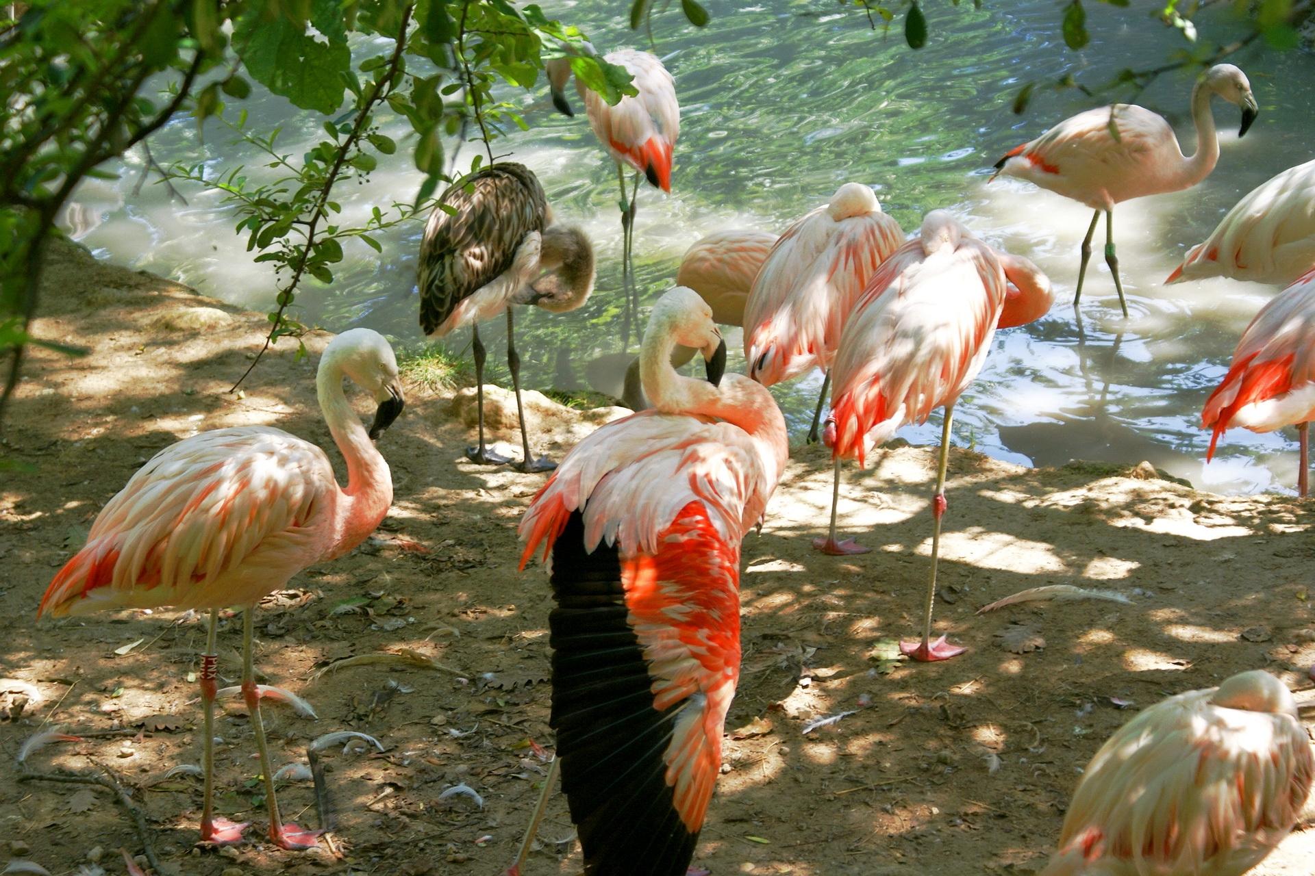 птица фламинго картинки уже проходили через