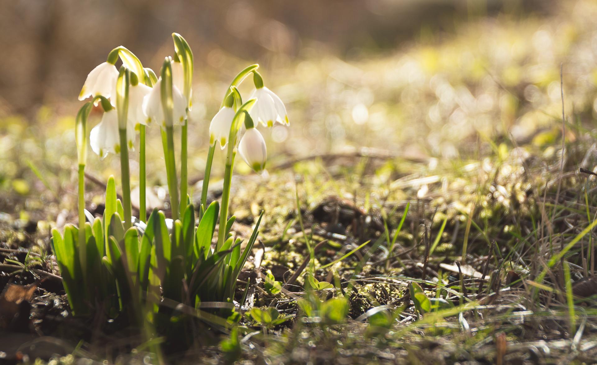 Wallpaper Flower Blume Spring Fruhling Nature Natur Nikon