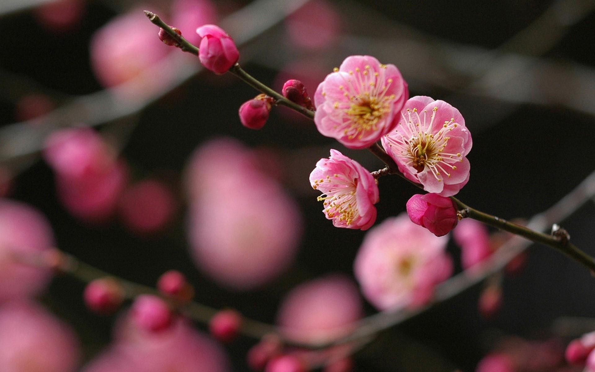 красивая ветка с цветами картинки тест поможет вам