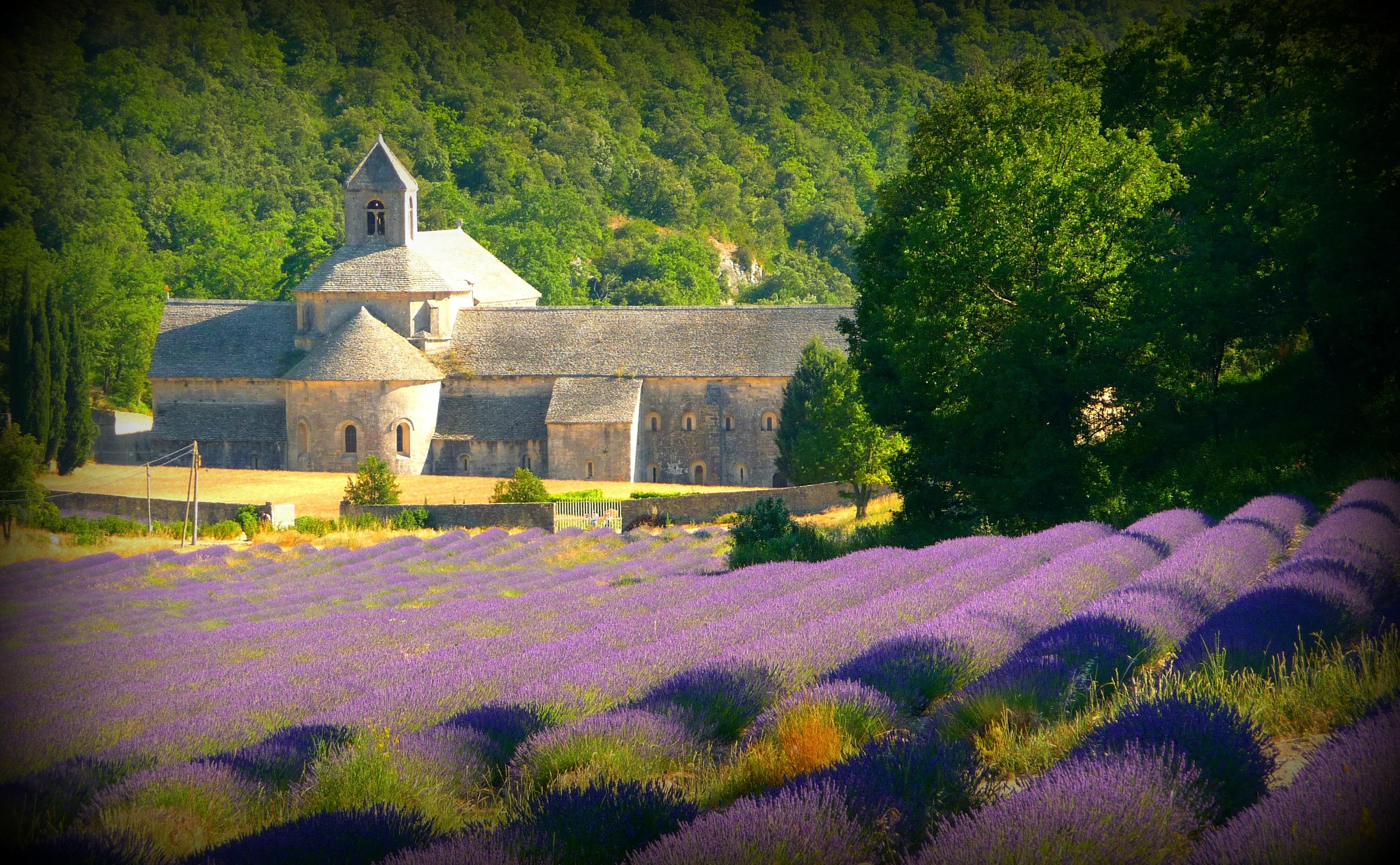 Wallpaper : flower, nature, landmark, english lavender
