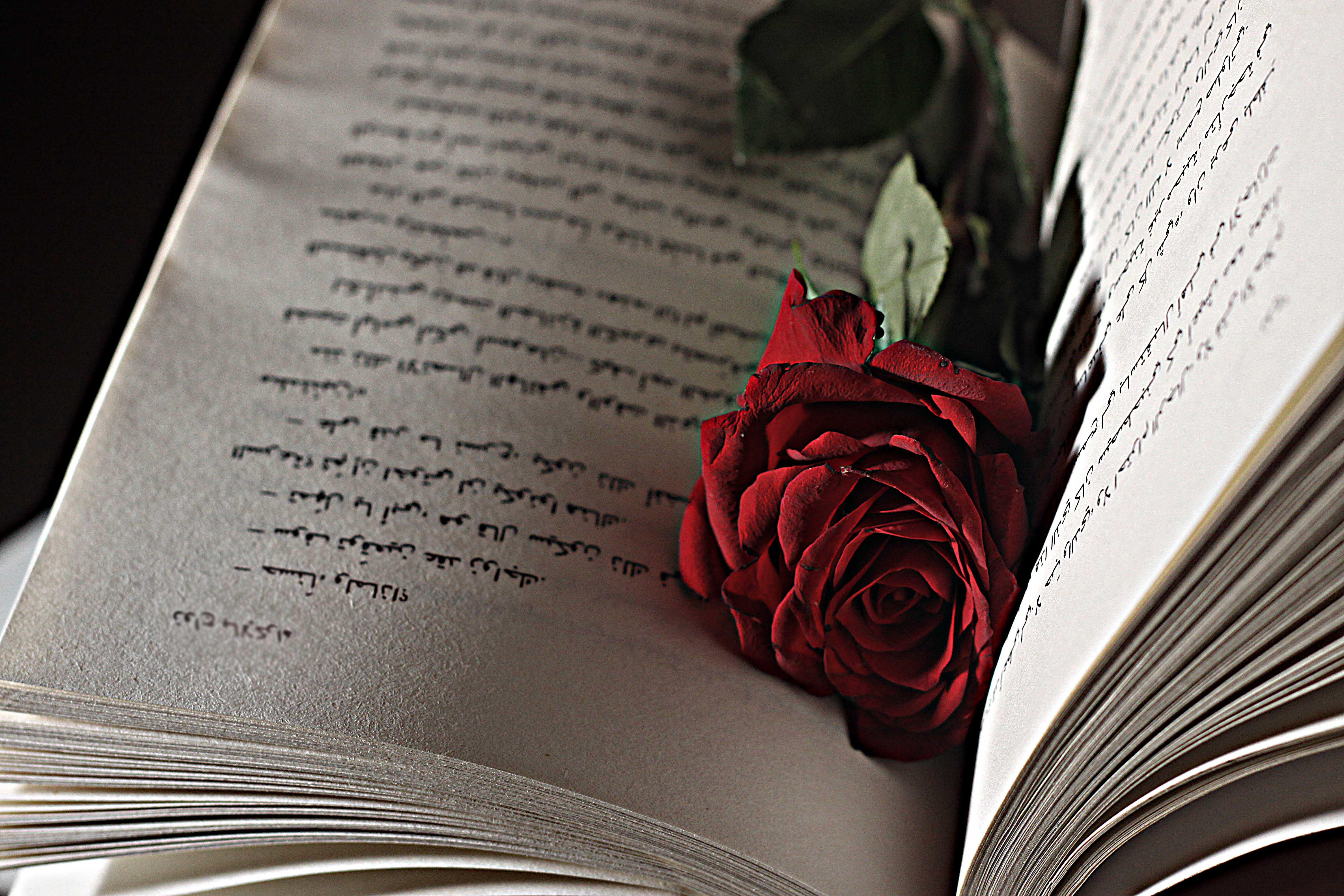 Картинки с черными розами и книгой, для свекра днем
