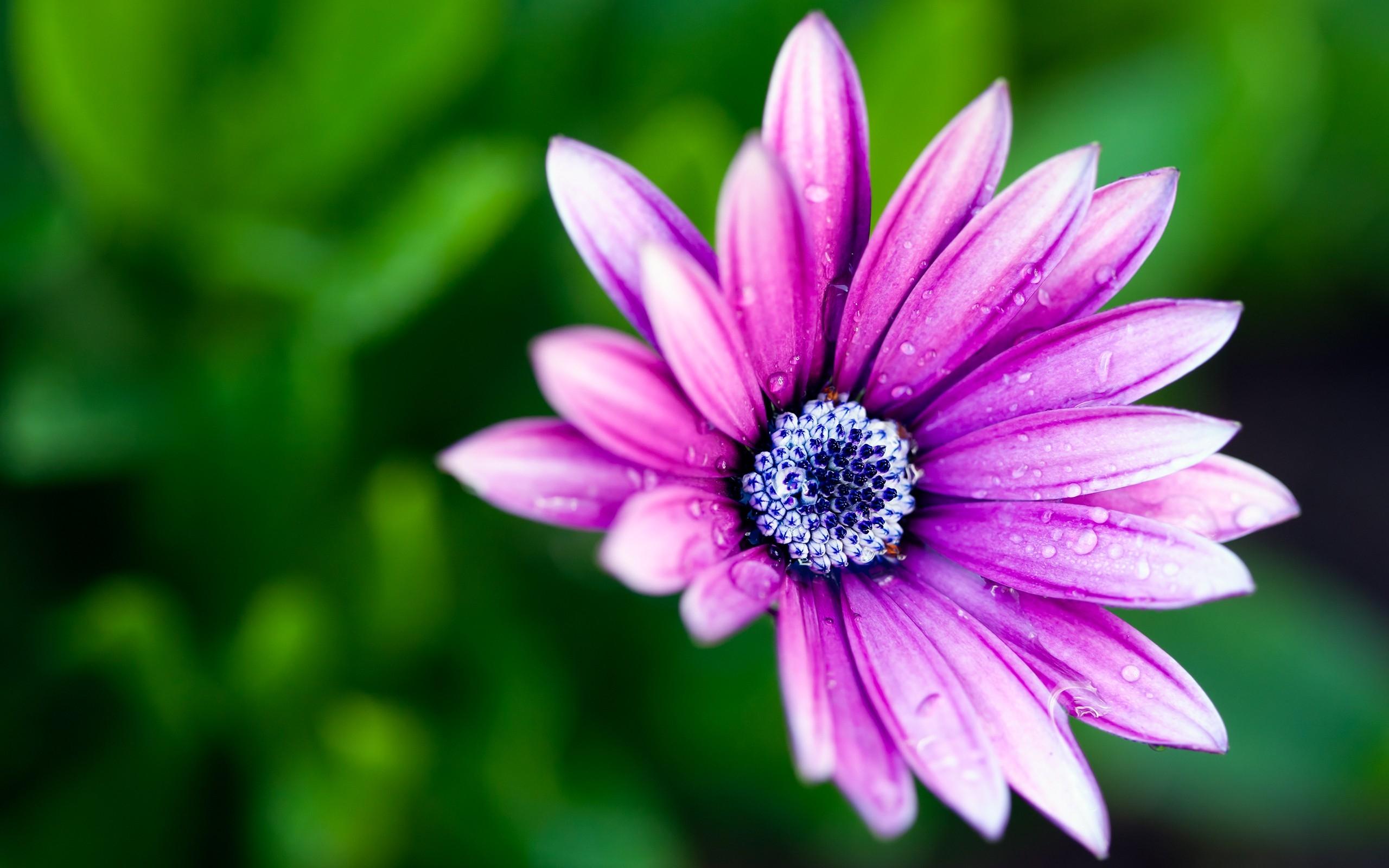 кенона картинки красивые цветы большой формат которые делают
