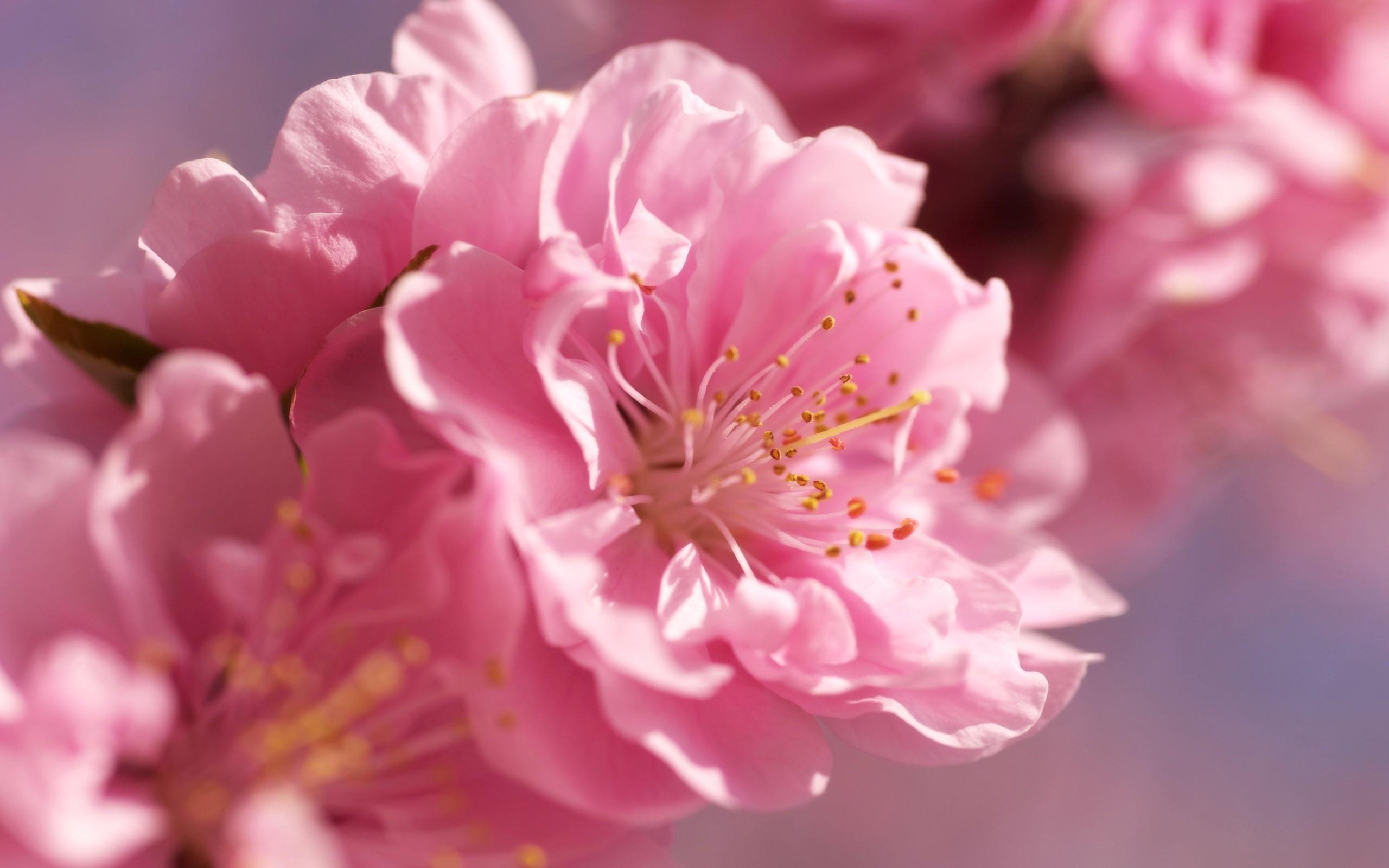 Розы: фото цветов с названиями