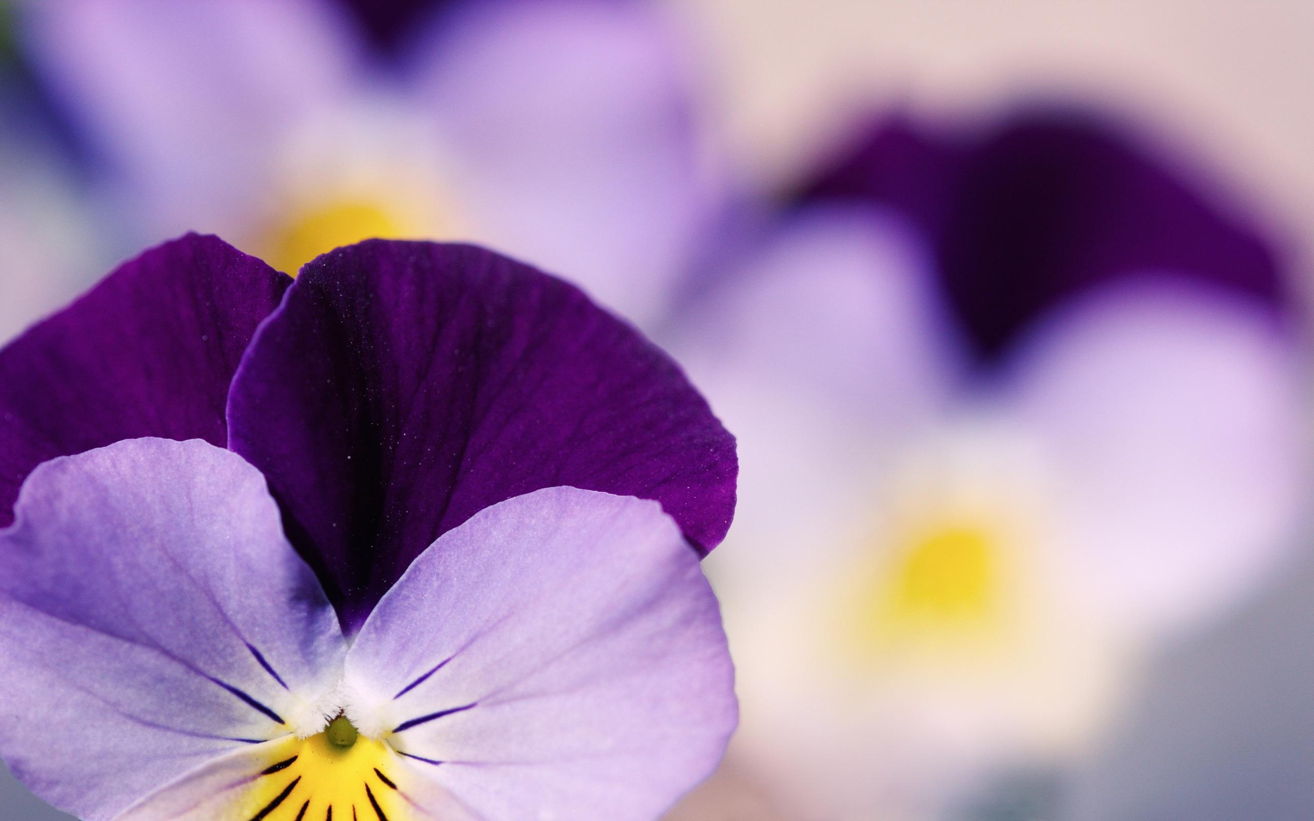 Самые красивые обои цветы на рабочий стол скачать бесплатно