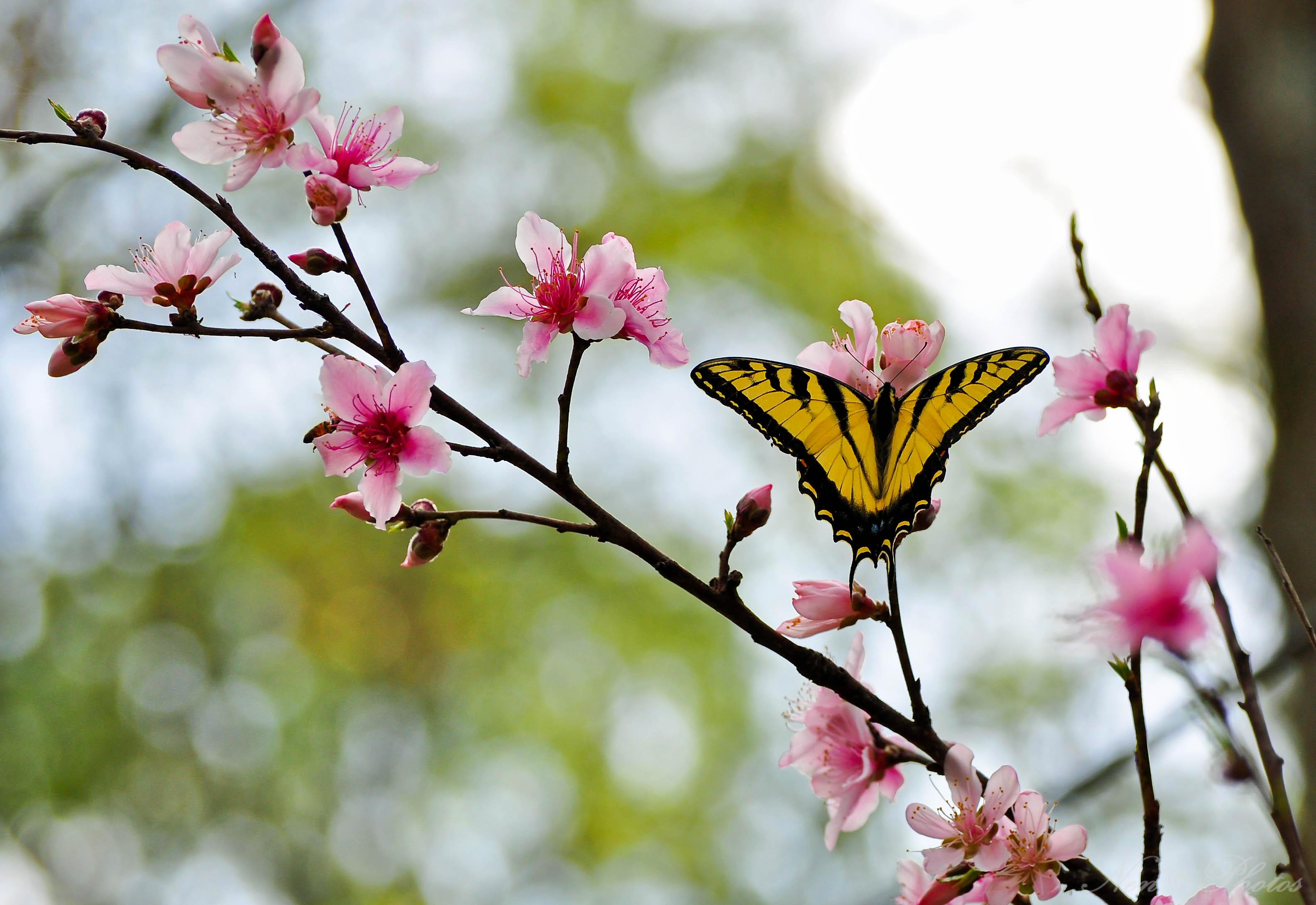 Картинки бабочек весной