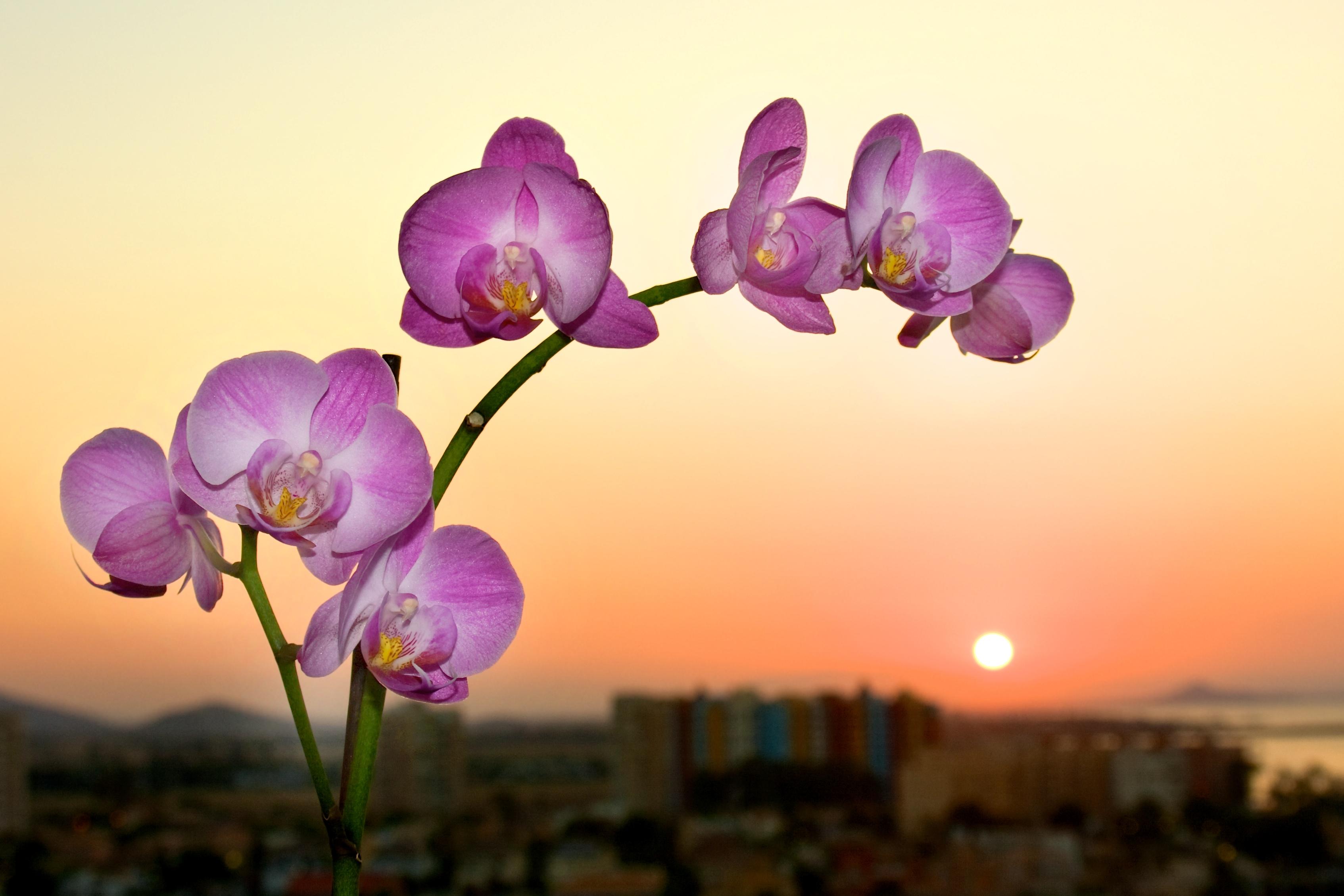 foto de Fond d'écran : fleur, rose, plante à fleurs, violet, flore ...