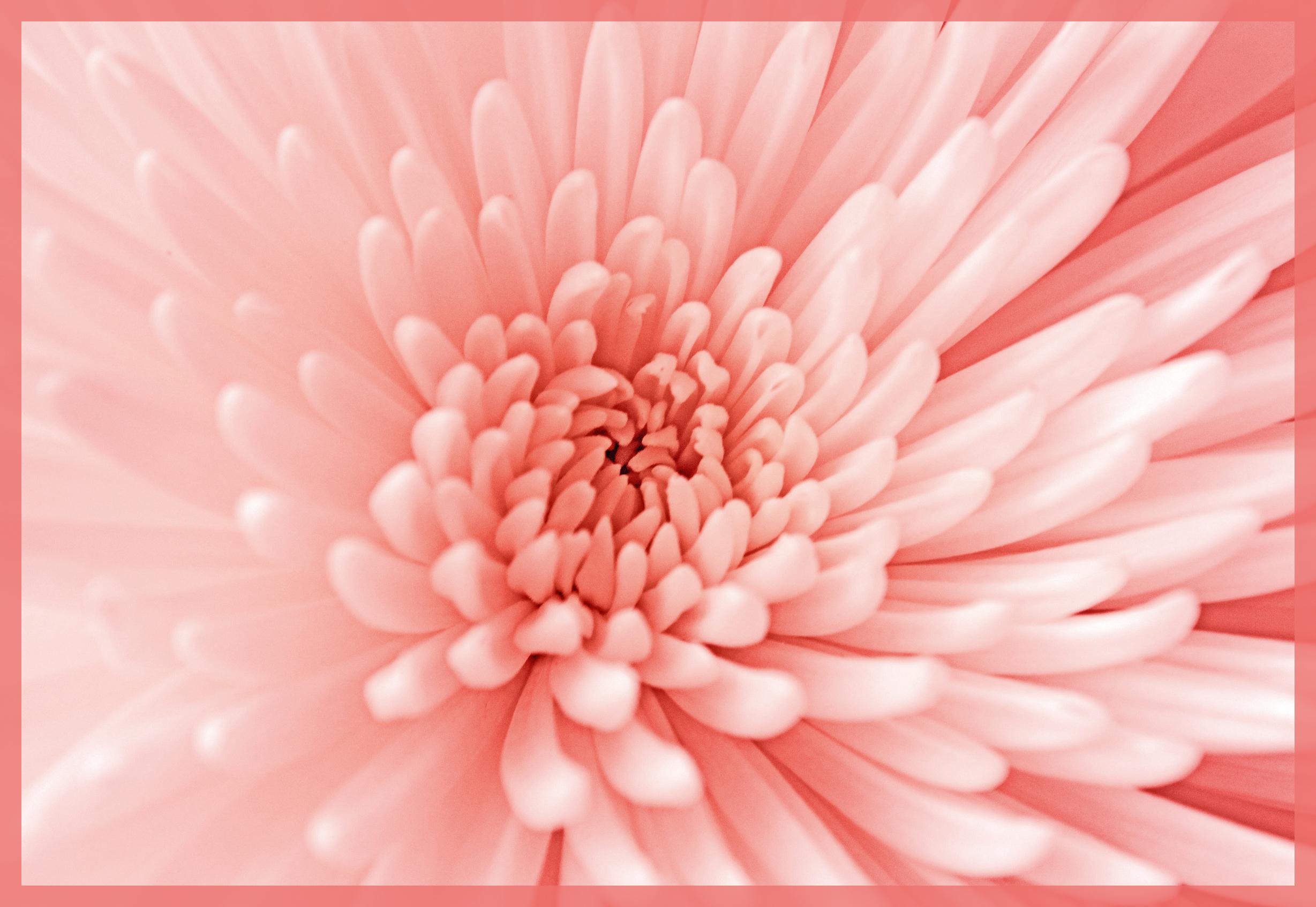 foto de Best 50+ Sfondi Colori Pastello Rosa sfondo