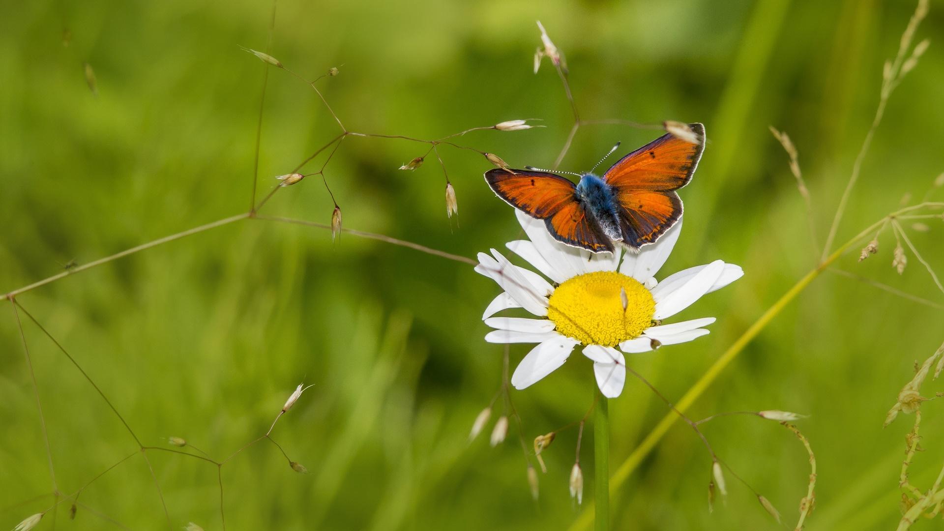 Обои насекомое, цветы. Природа foto 7