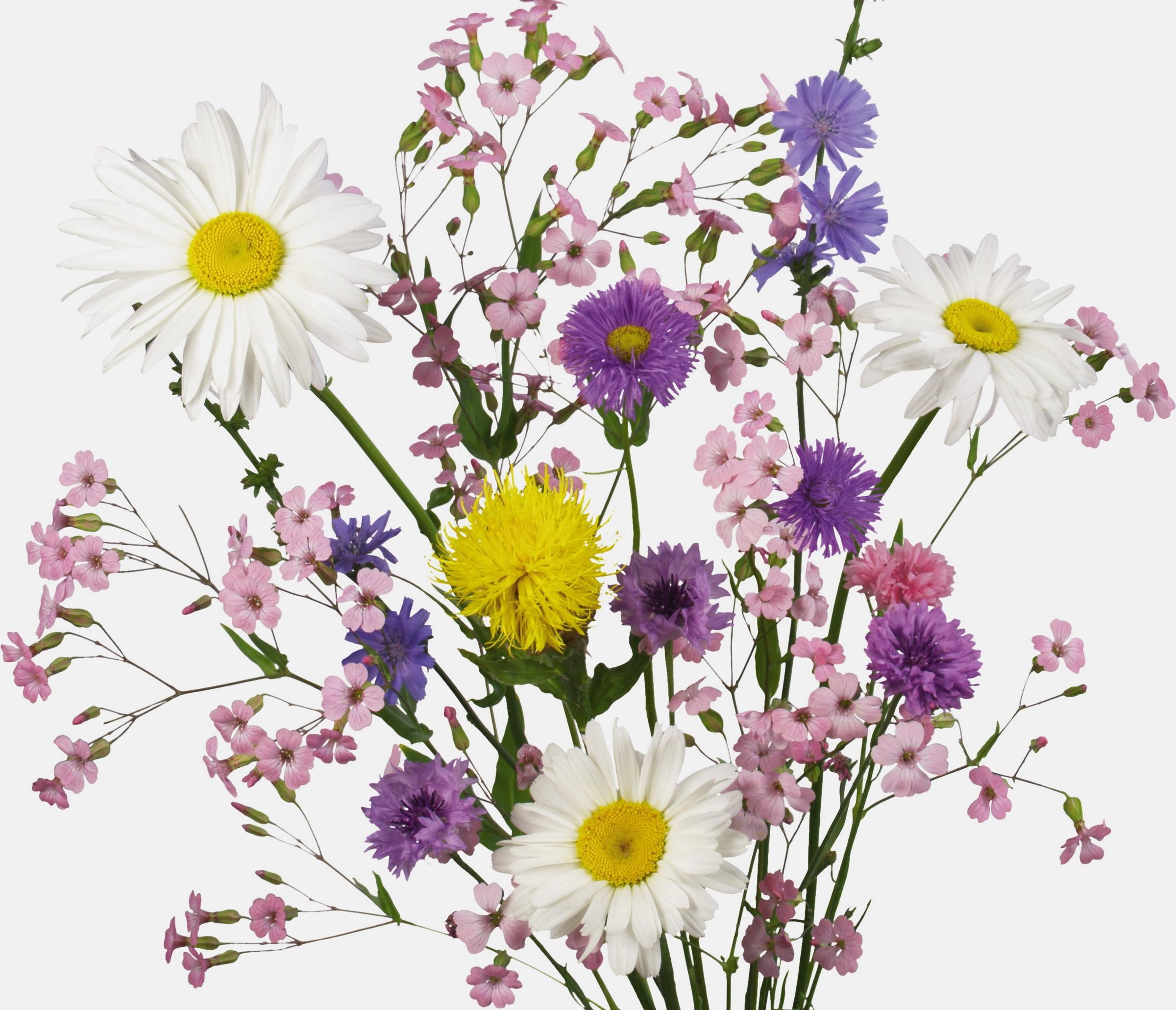 Fondos de pantalla flores rama cornflowers margaritas - Cortar hierba alta ...