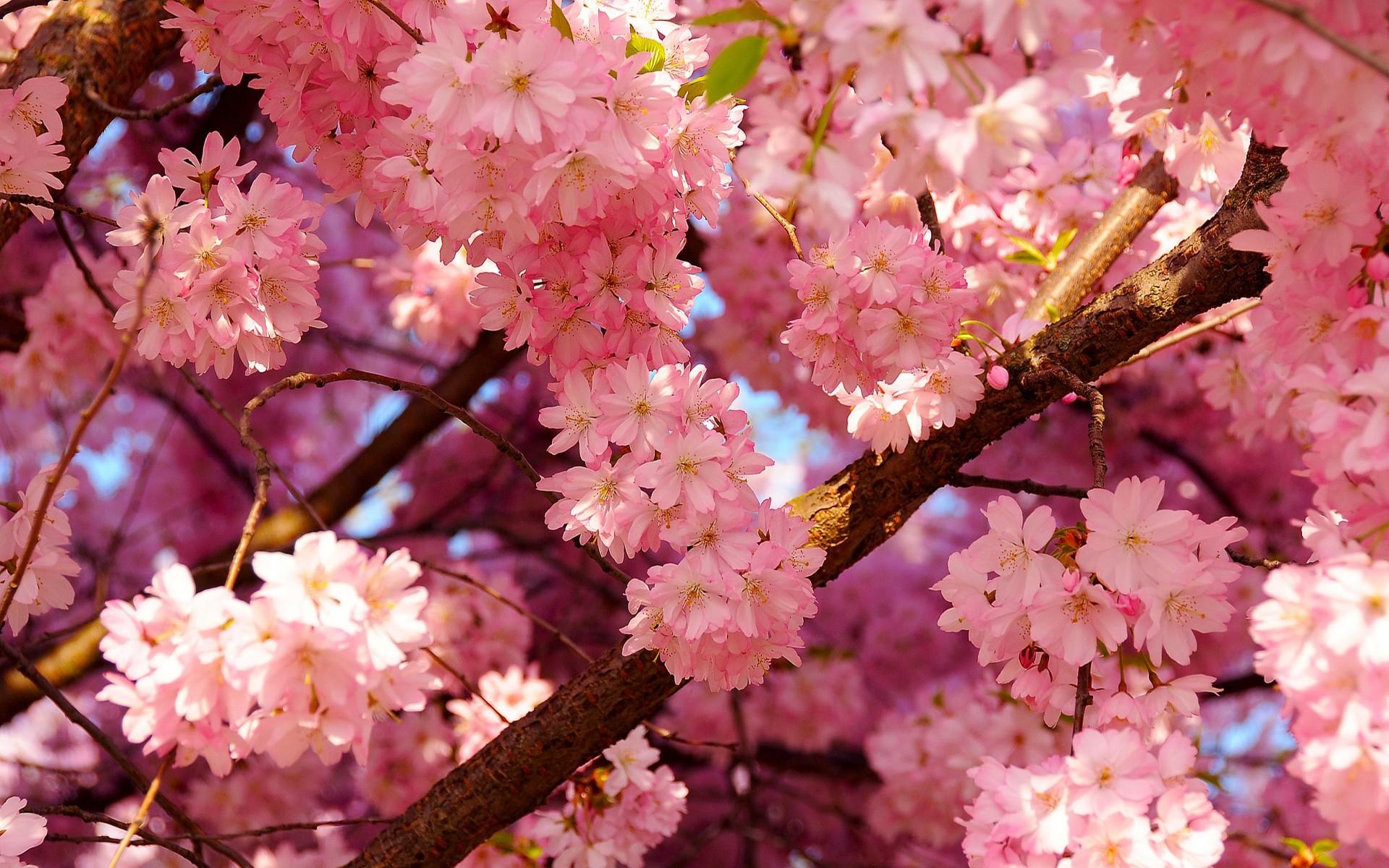 Цветы весенние хорошего качества