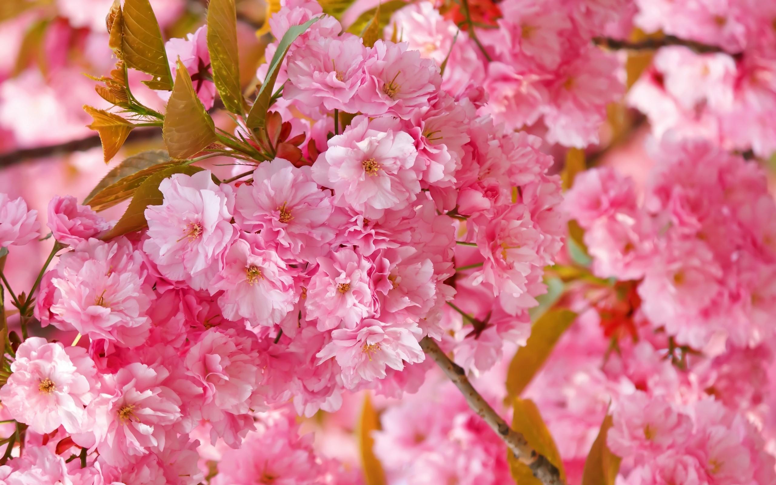 что весна фото в высоком разрешении интернет-магазин