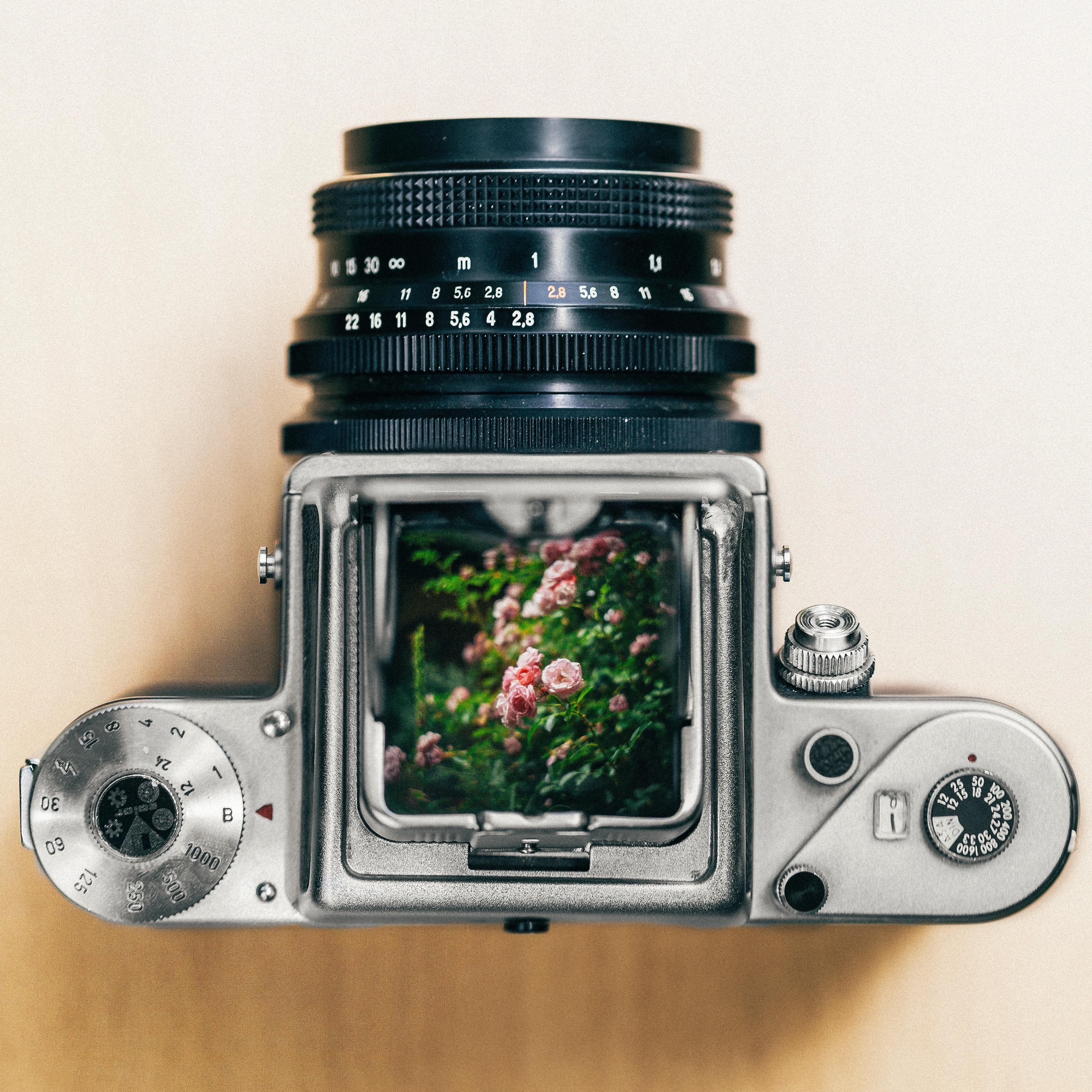 середине лета фотобанки для цифровиков руководтсво созданию