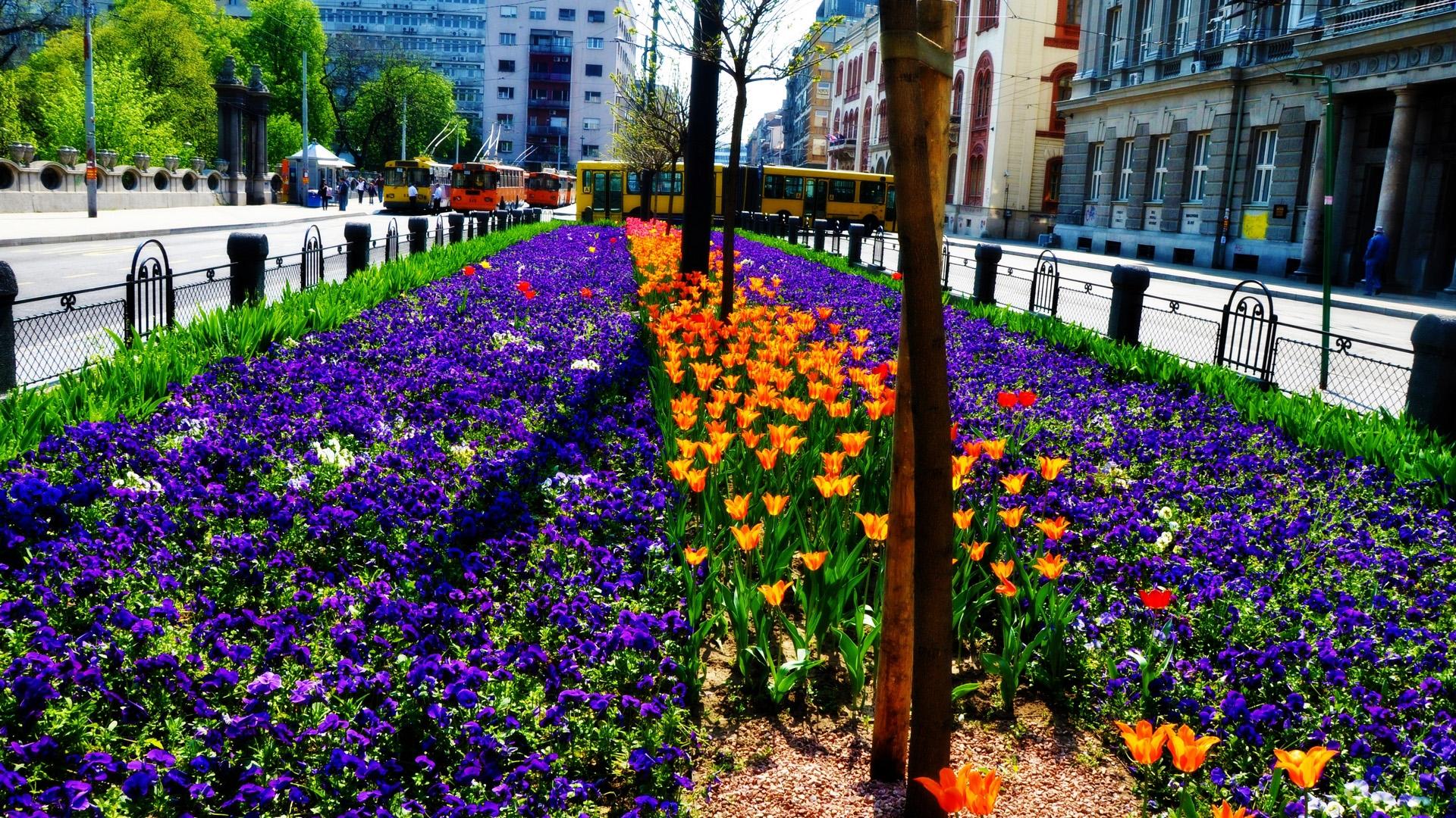 утолщениями растения на улицах города фото она