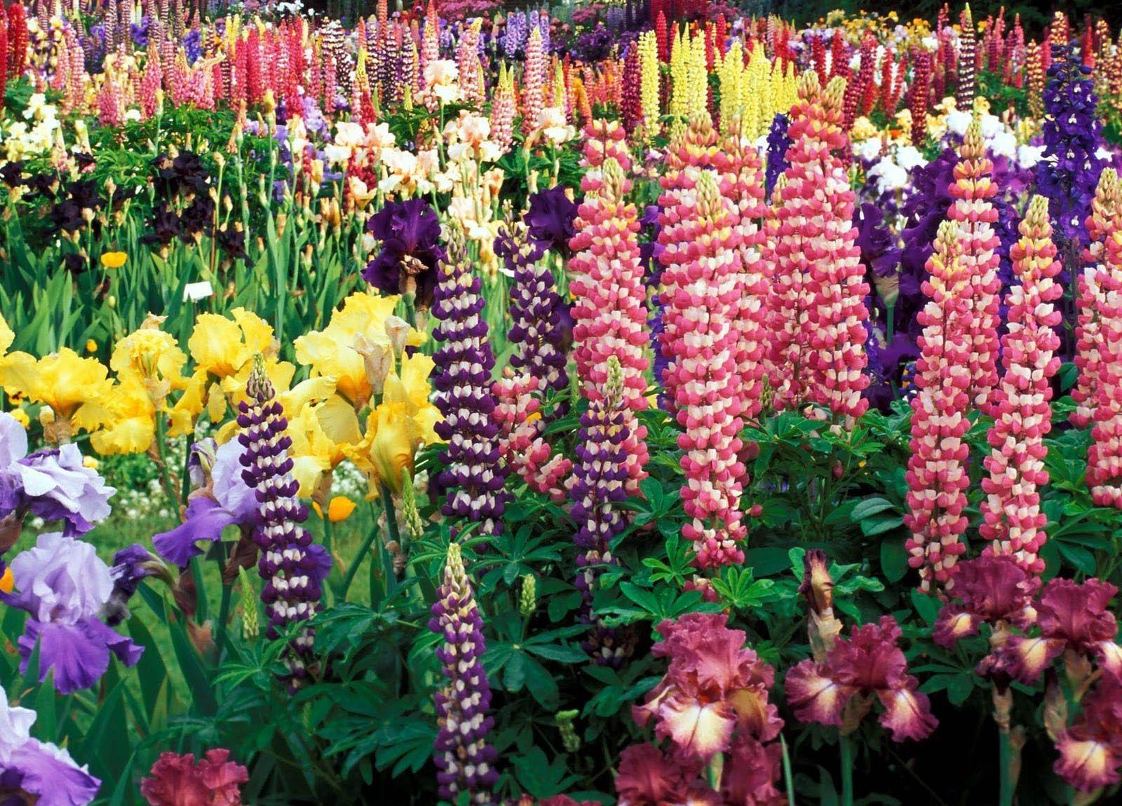 Наименование и фото цветы