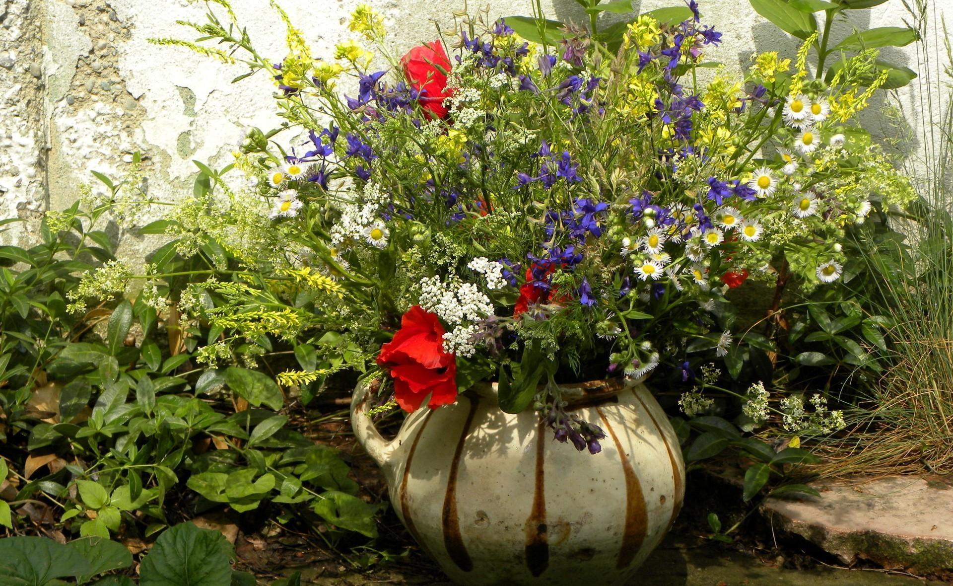 Fondos De Pantalla Flores Jardín Campo Verde