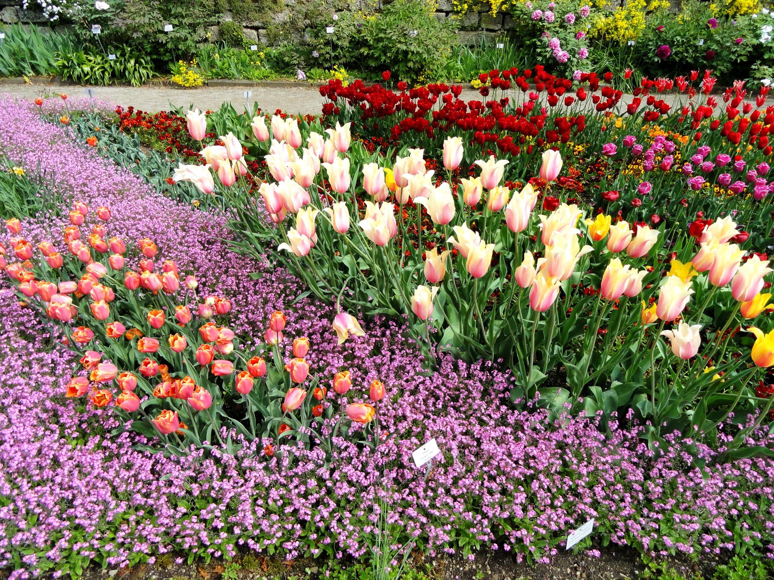 тюльпаны композиции в саду фото