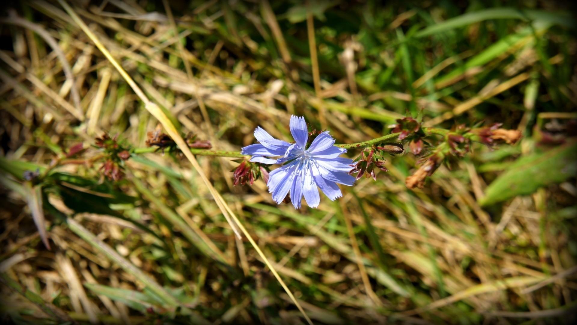 Wallpaper : garden, nature, green, blue flowers, vignette, herb ...