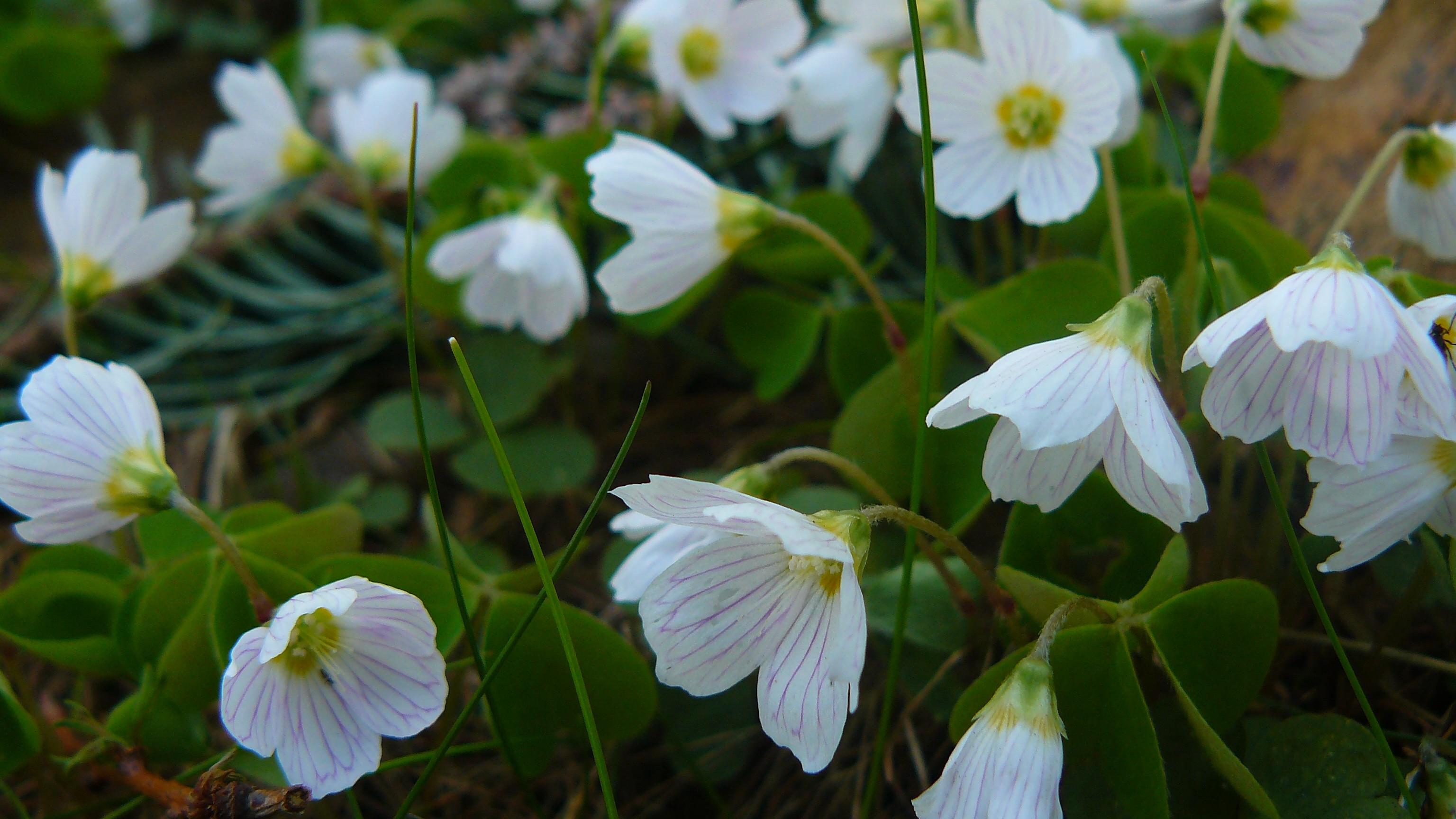 Fondos De Pantalla Jardin Naturaleza Verde Flores Blancas