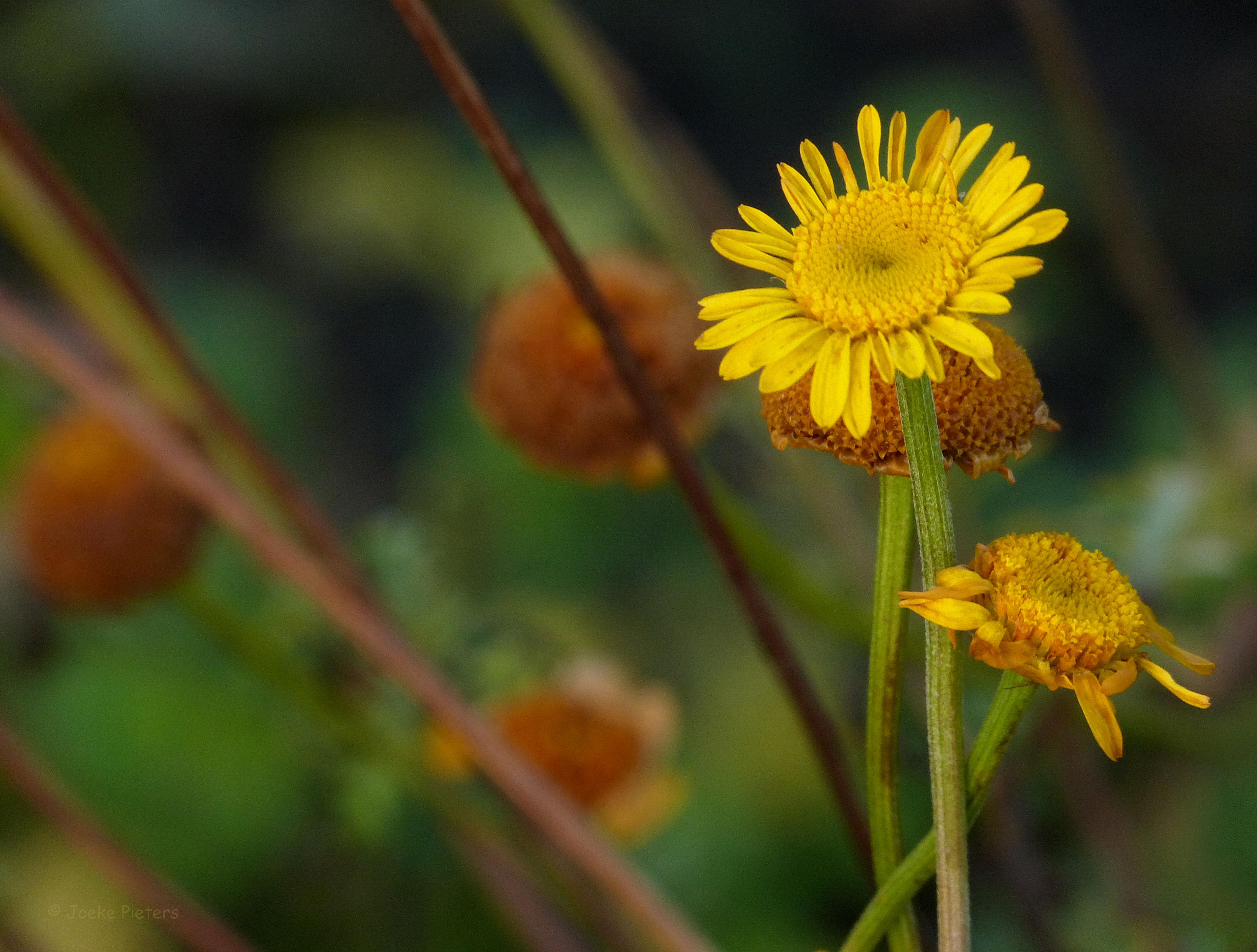 Fond d\'écran : jardin, la nature, la photographie, jaune, l\'automne ...