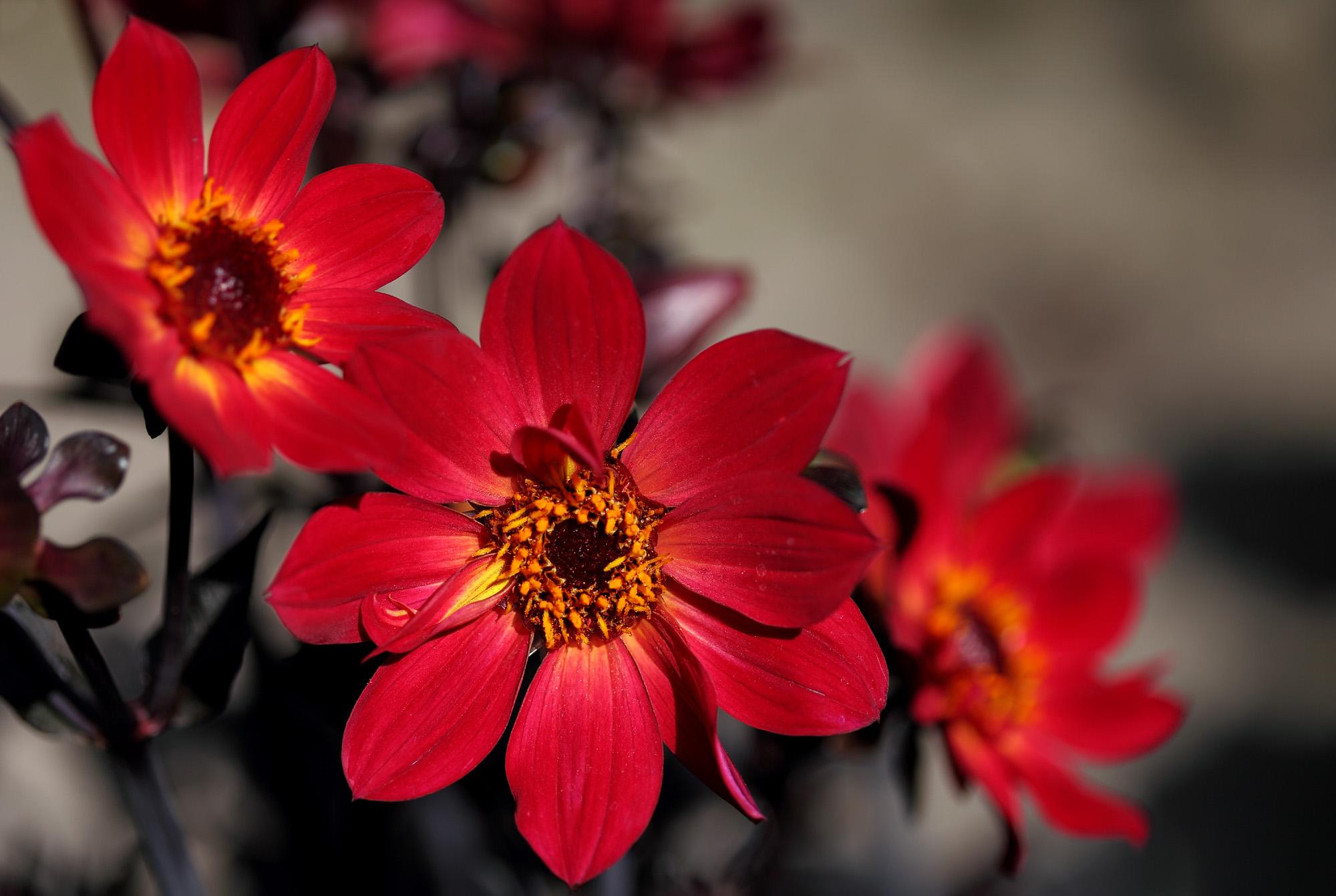 трактовка красные только красные цветы фото глынин, молодой
