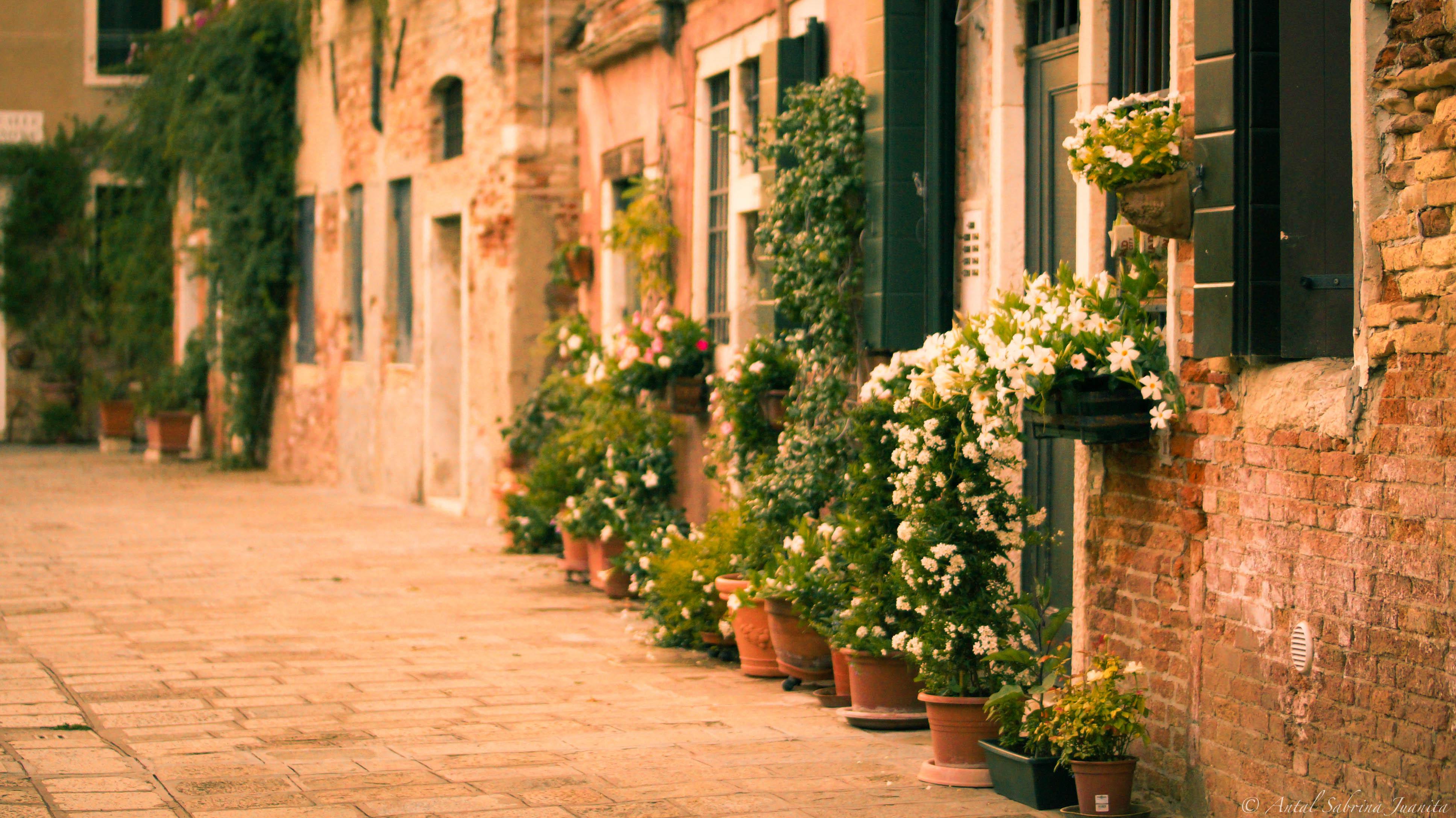 Wallpaper flowers garden street italy plants venice for Classic house green street