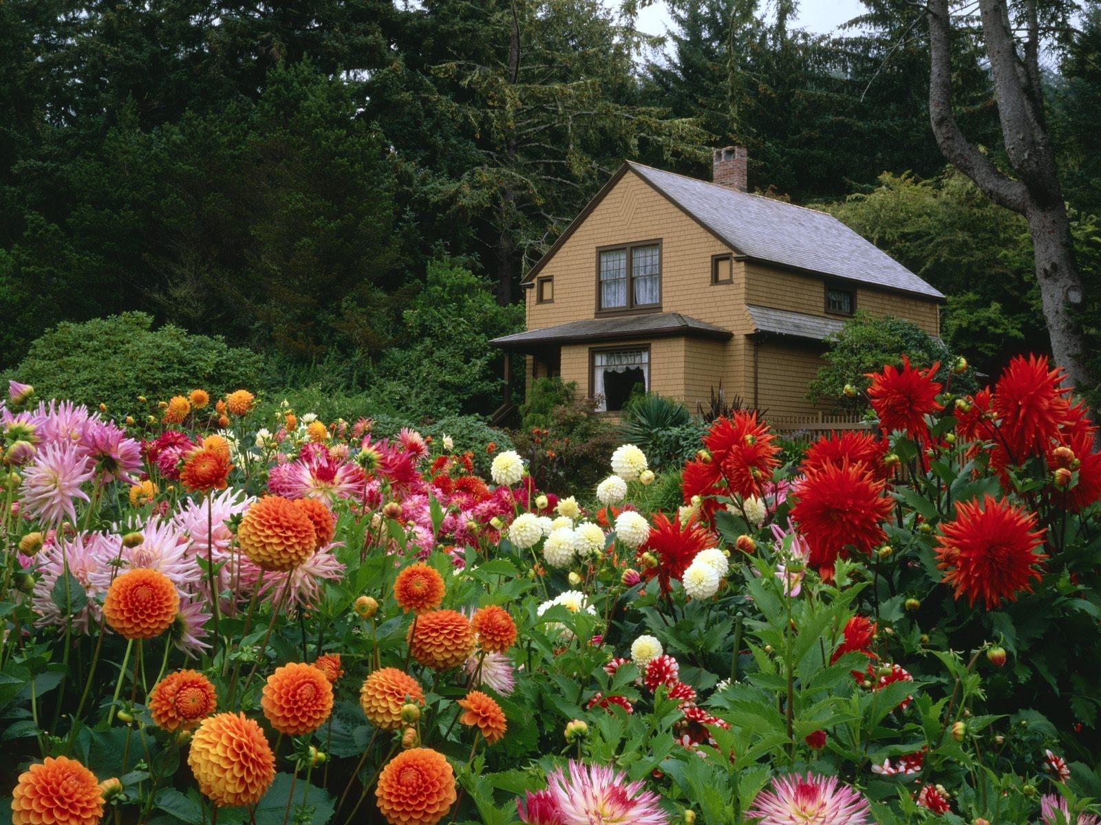 красивый сад с цветами фото что при