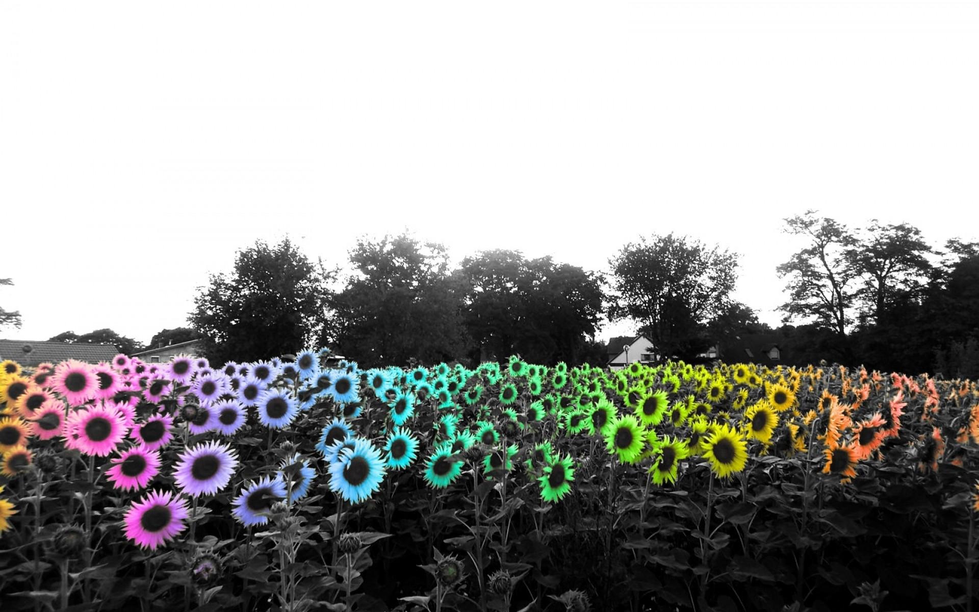 Hintergrundbilder : Blumen, Gras, Pflanzen, Selektive Färbung ...