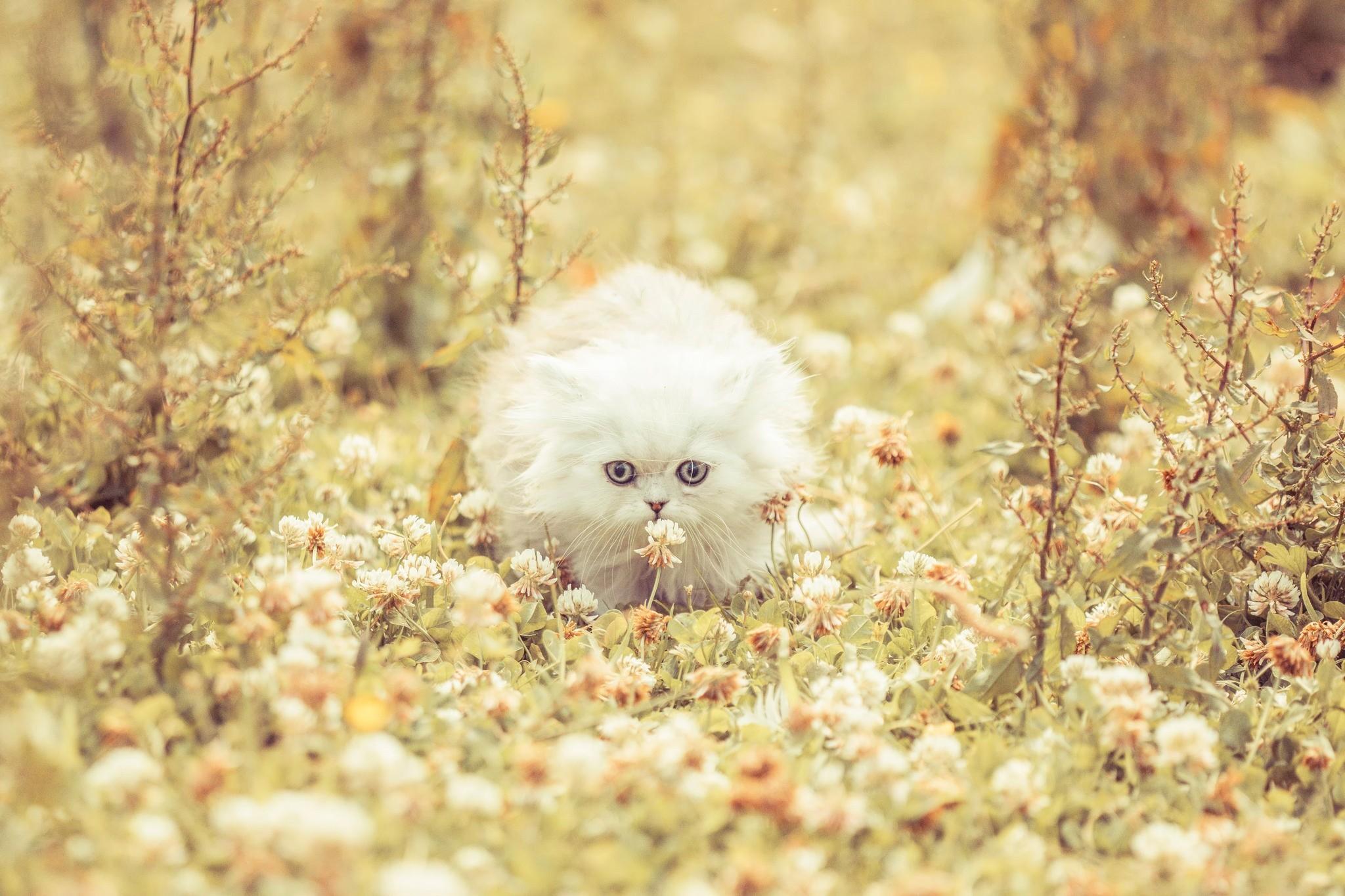 Красивое фото кота на аву