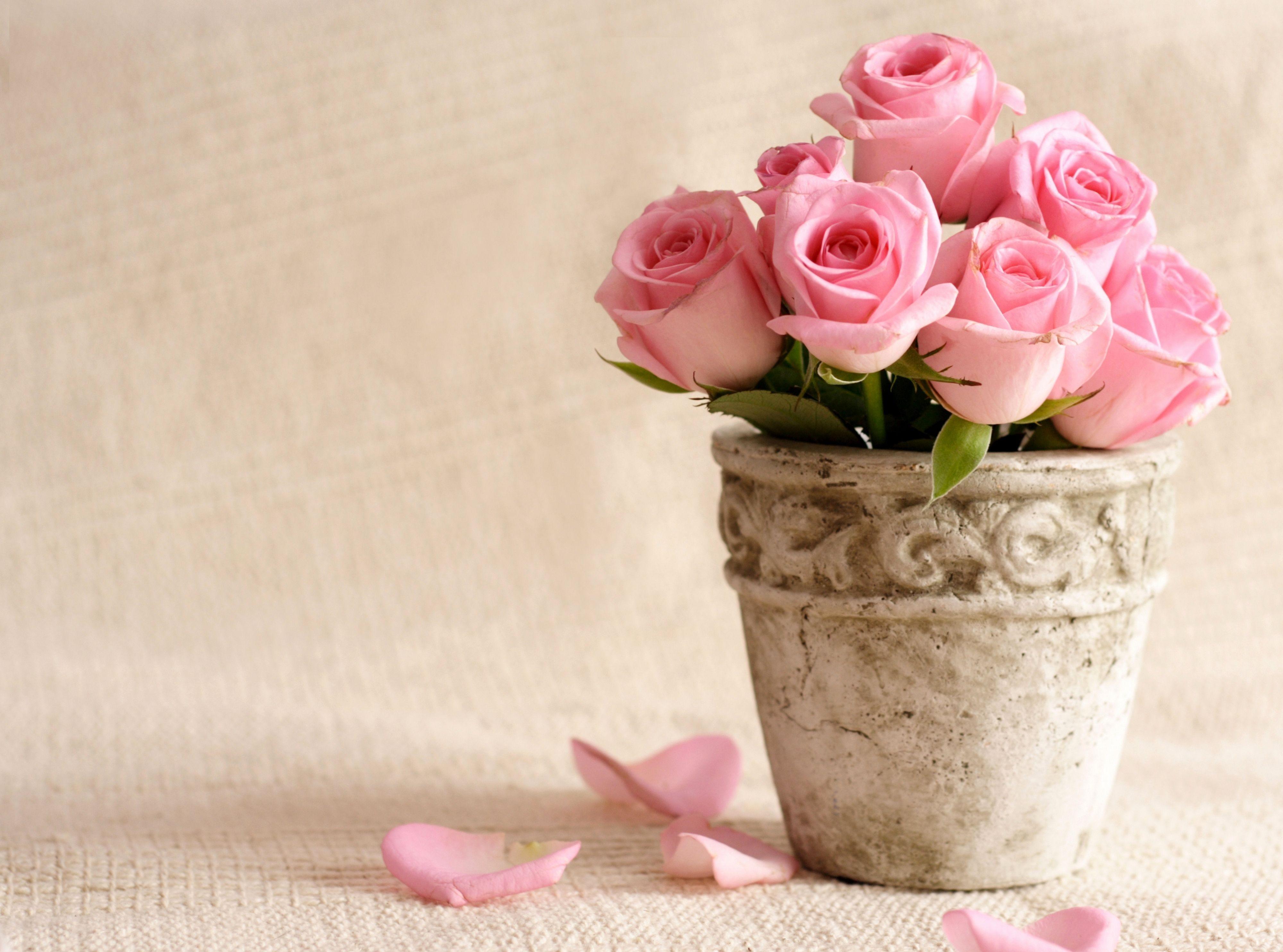 Fond D Ecran Cœur Petales Fleur Des Roses Pot Petale Plante
