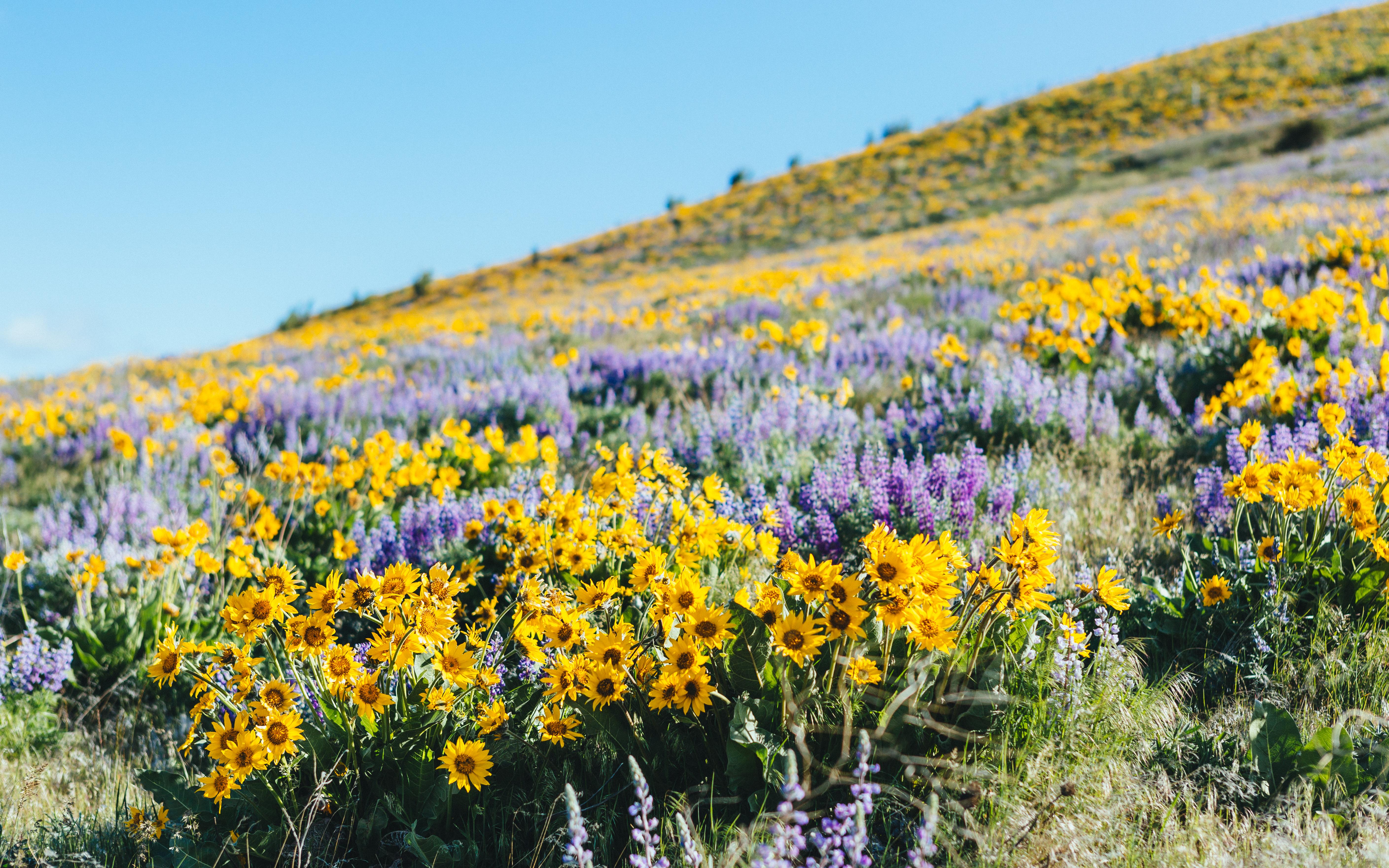 Весенние цветы в степи фото и названия