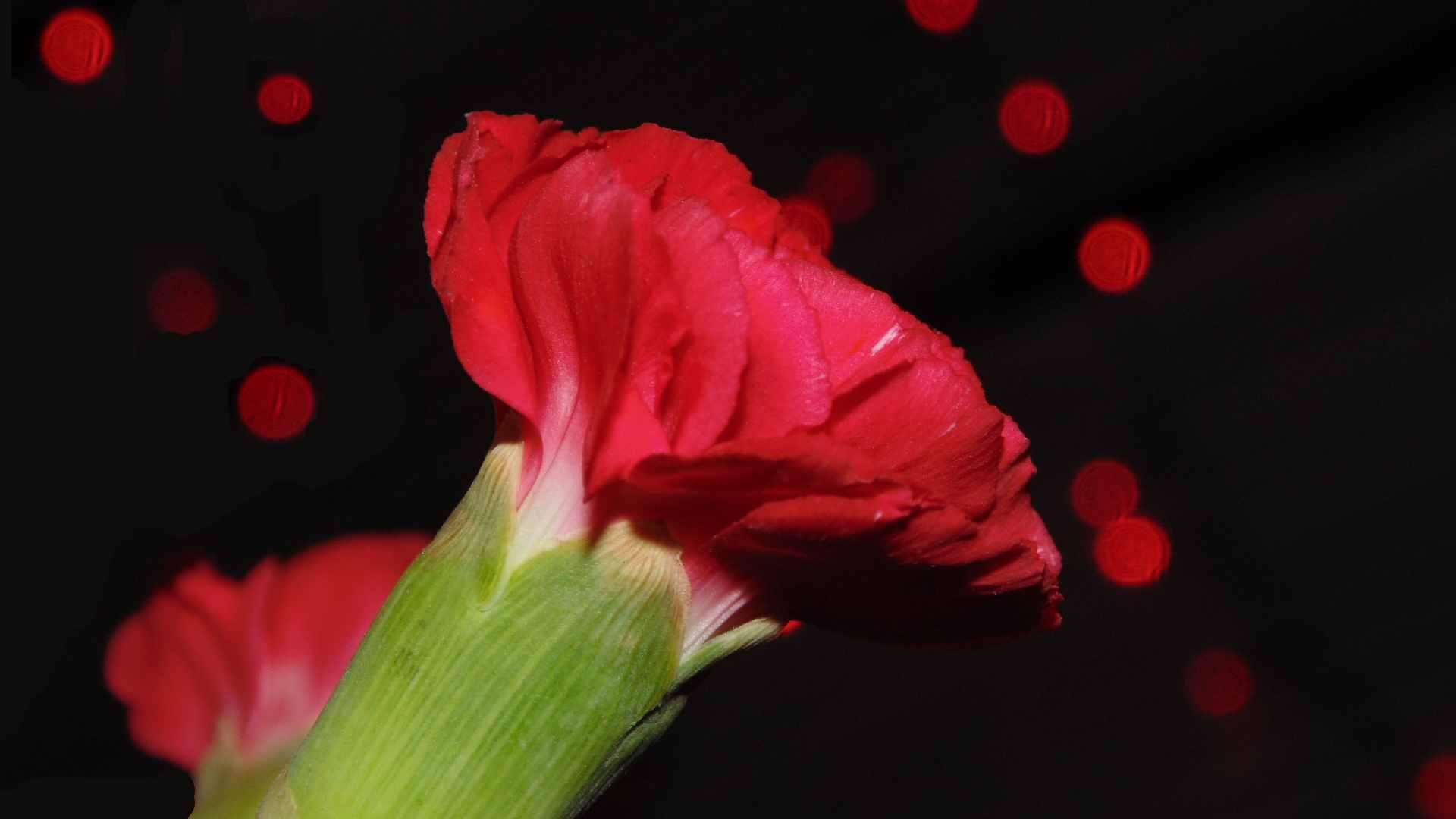 Wallpaper Flowers Light Red Flower Love Beautiful Lights