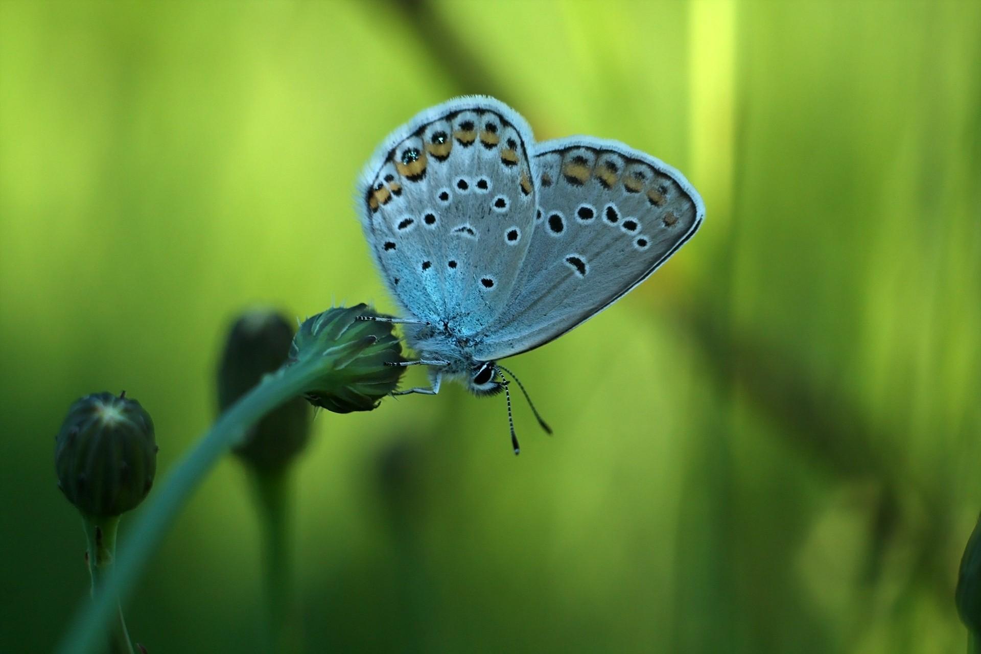 壁纸 花卉 宏 昆虫 野生动物 1920x1280像素 微距摄影 无脊椎