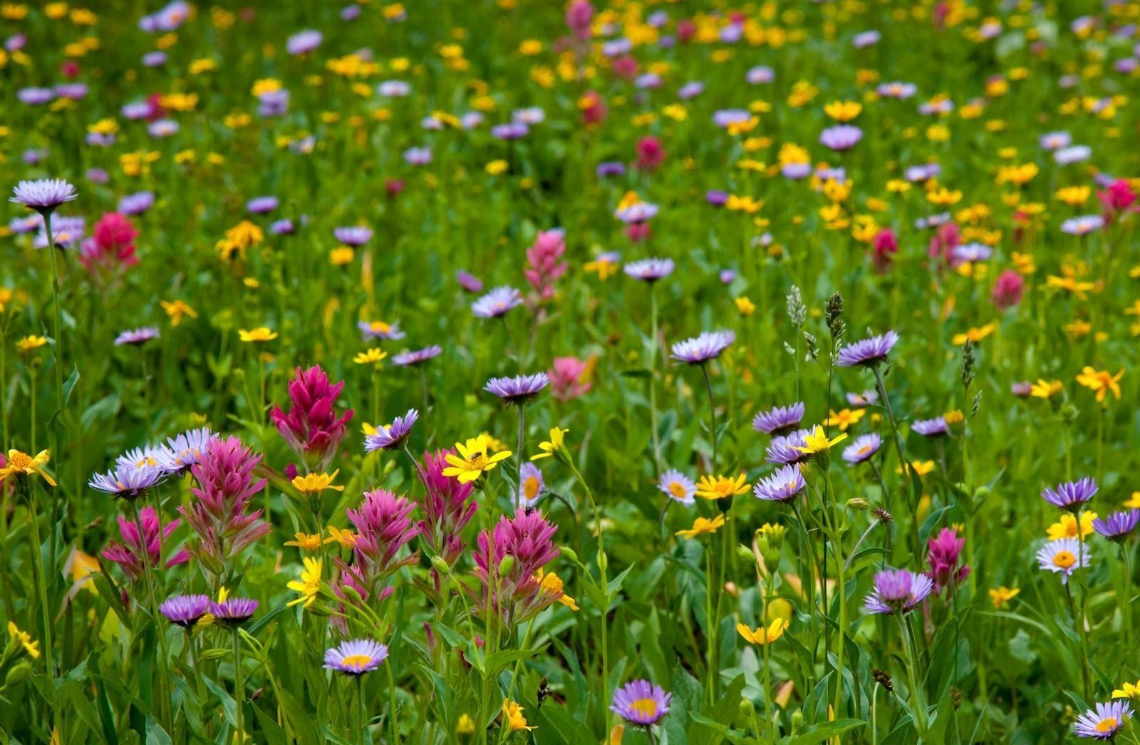 предлагаем только фото цветущих полей и лугов подписи видео
