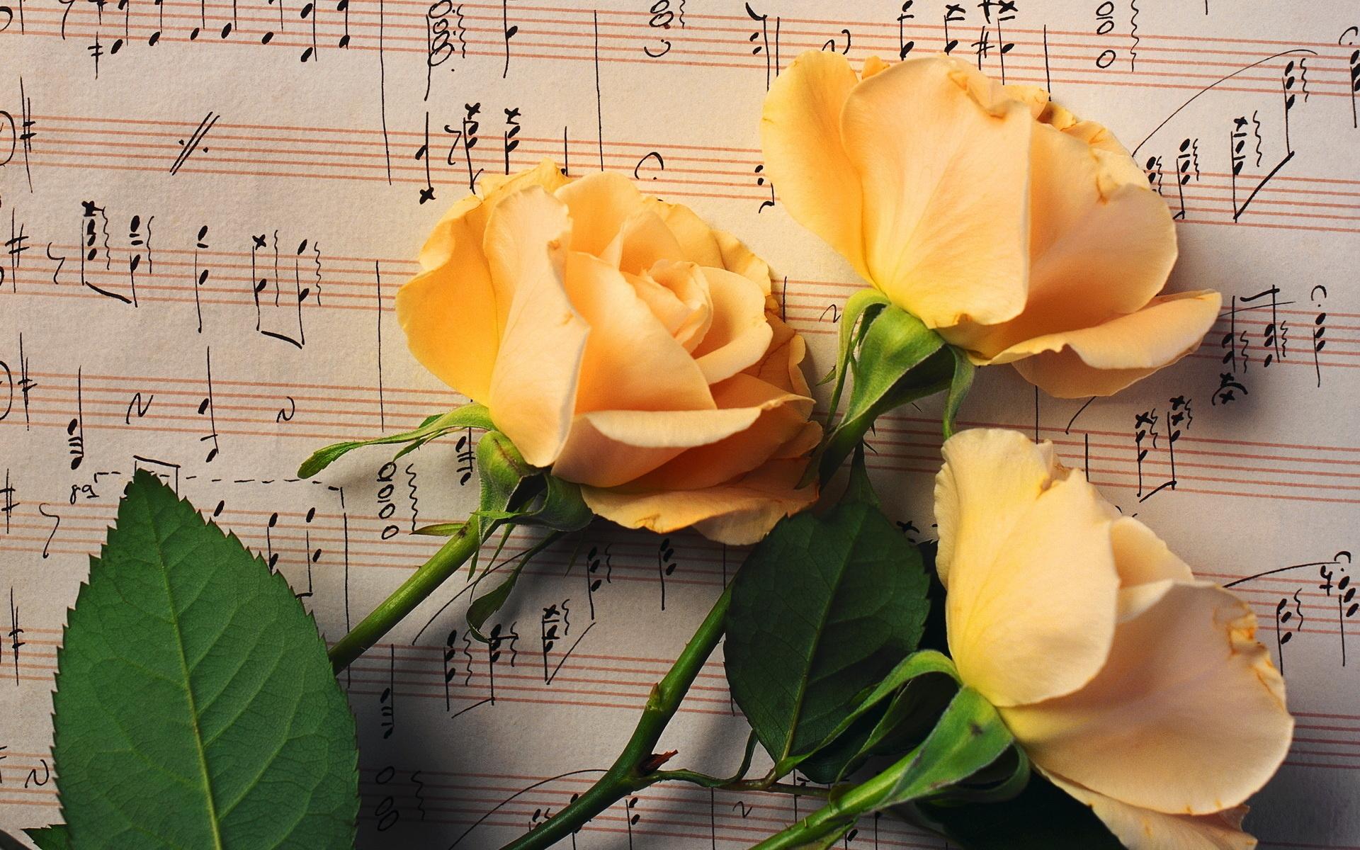 Sing a Song of Flowers | Song Lyrics | Preschool ... - YouTube