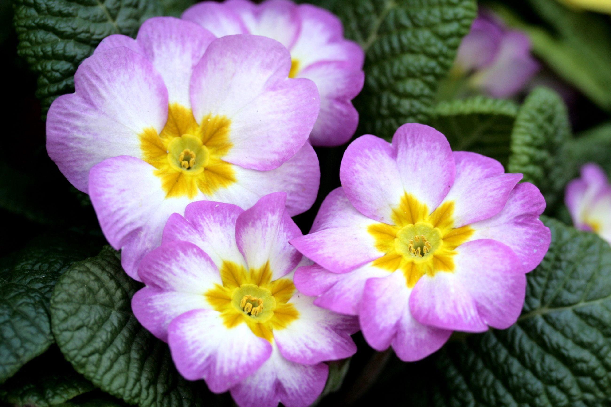 Красивые цветы и их названия картинки