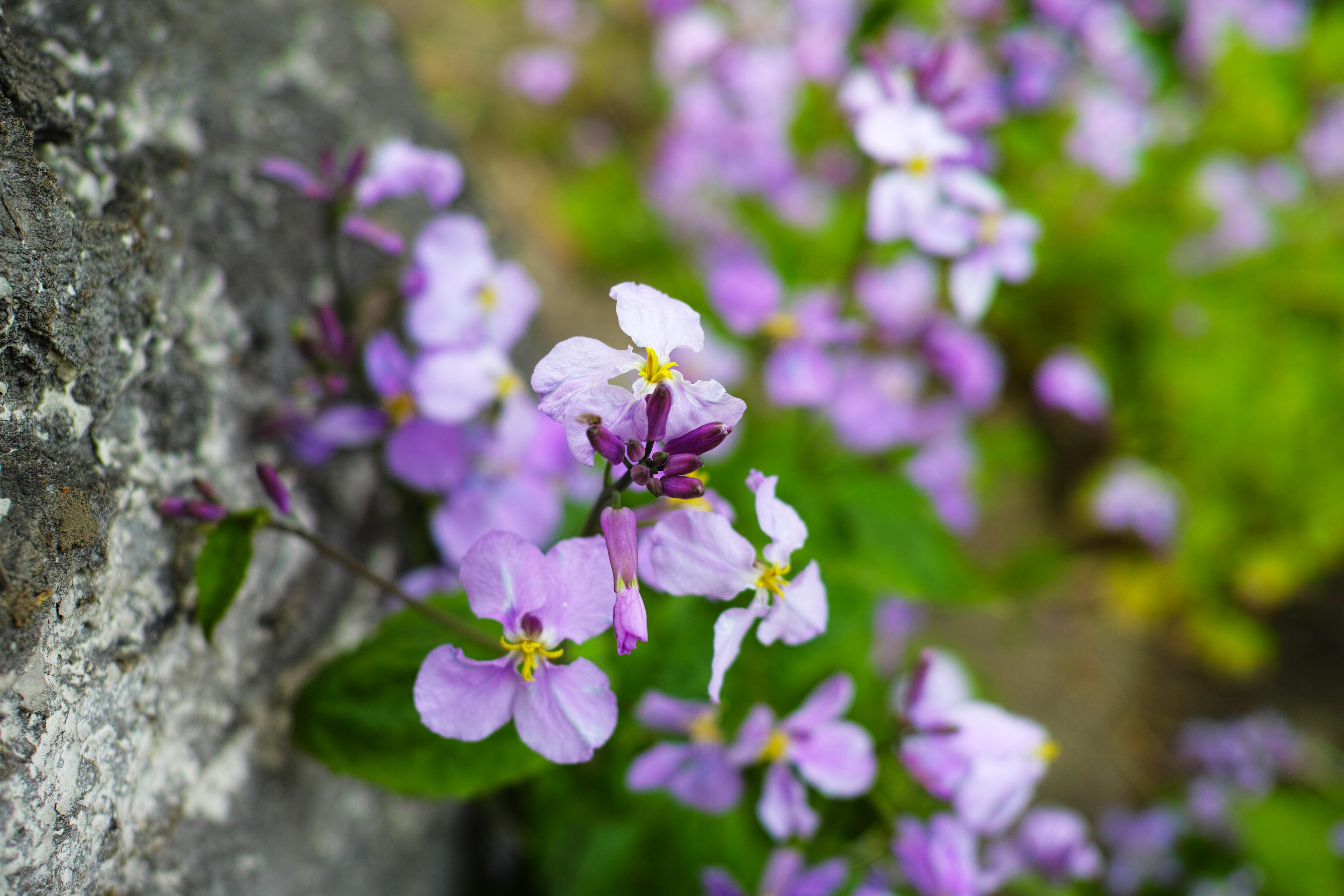 Flores Hermosas Flores Silvestres Fondos De Pantalla Gratis: Fondos De Pantalla : Flores, Naturaleza, Primavera, Color