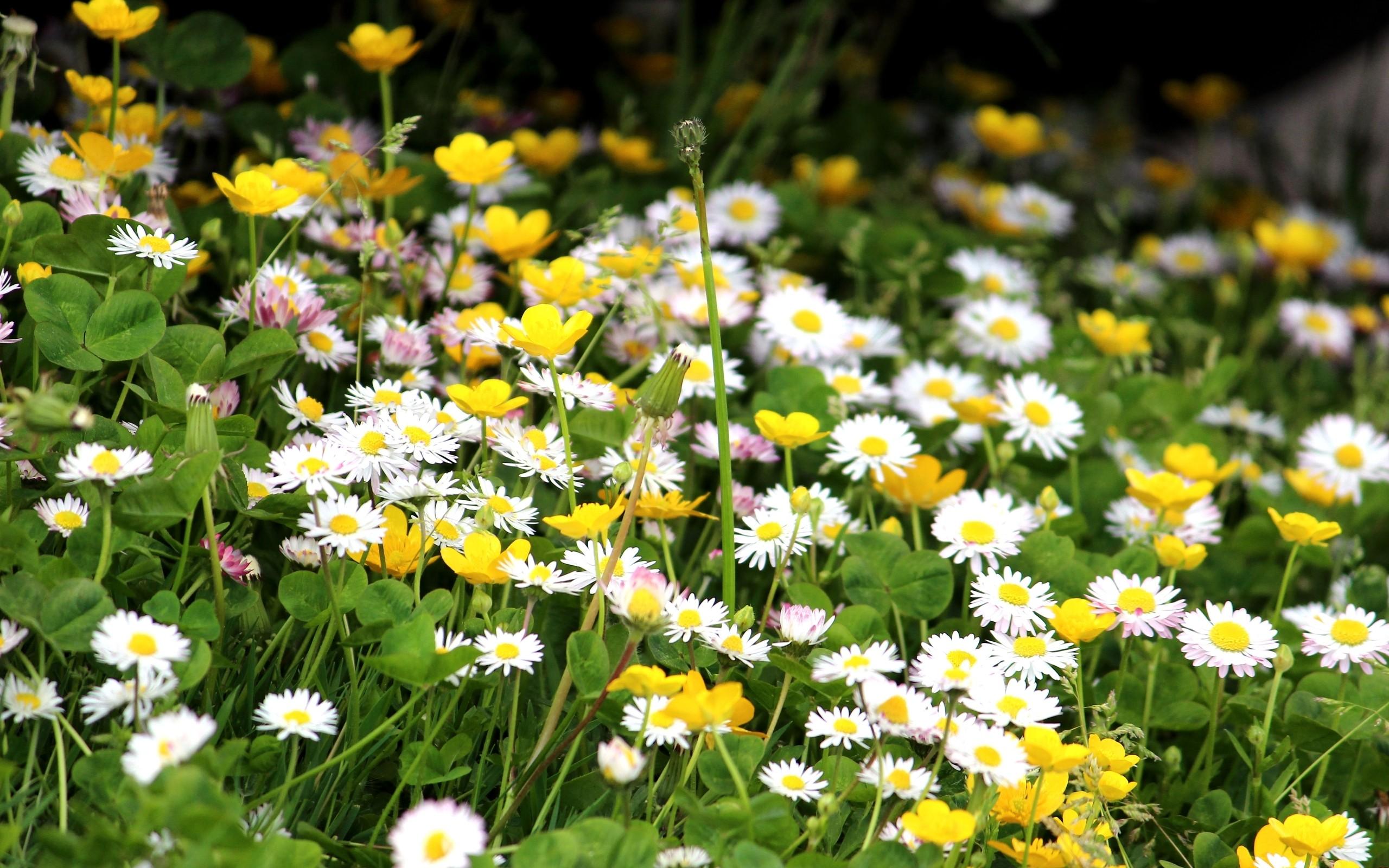 фото цветов в траве была обычная тренировка