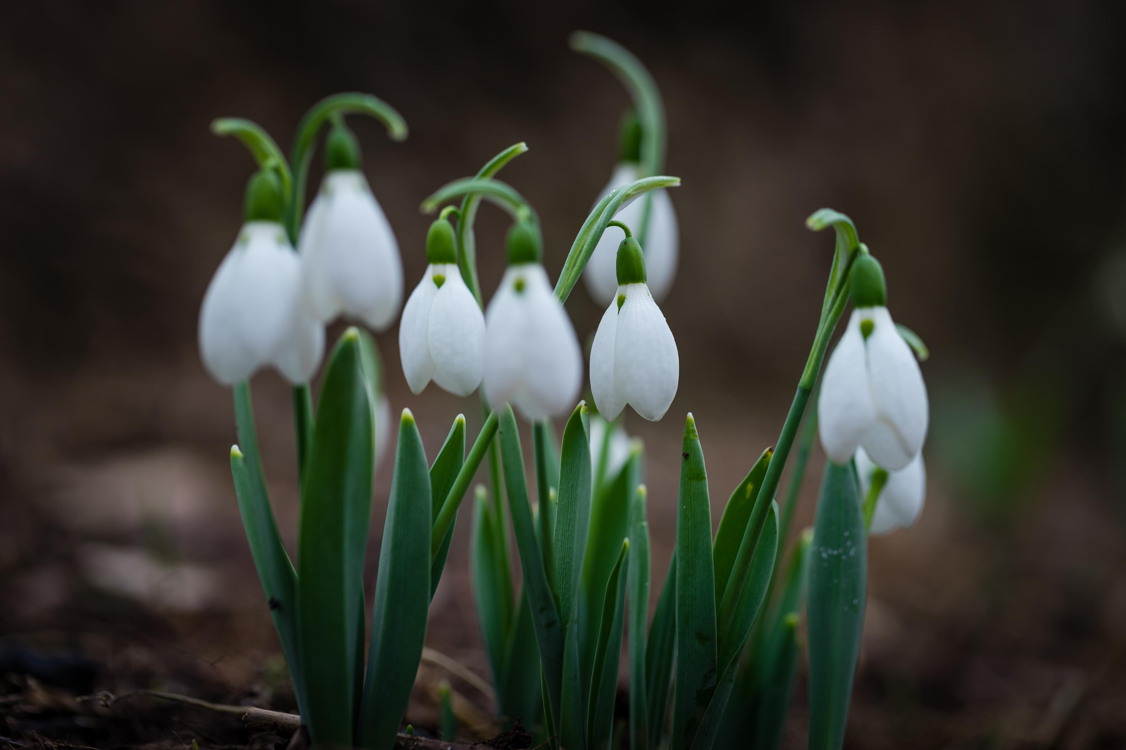 фото весны для сони этой рубрике можете